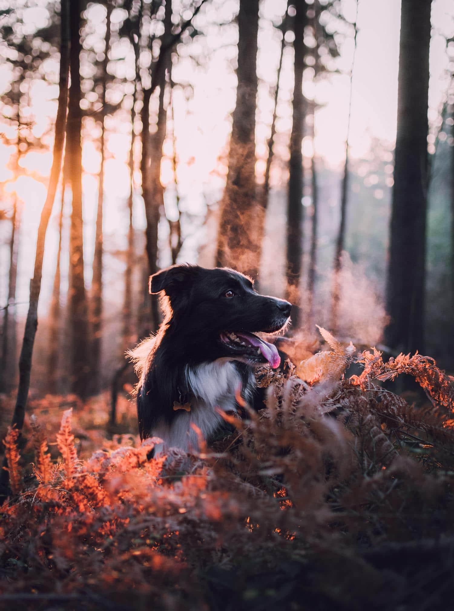 Perro a contraluz, con luz del atardecer como elemento creativo