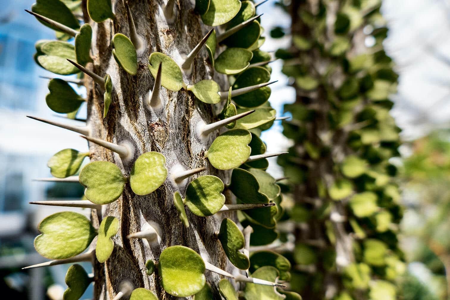 Fotografía de planta tomada con una cámara bridge Leica V-Lux 5
