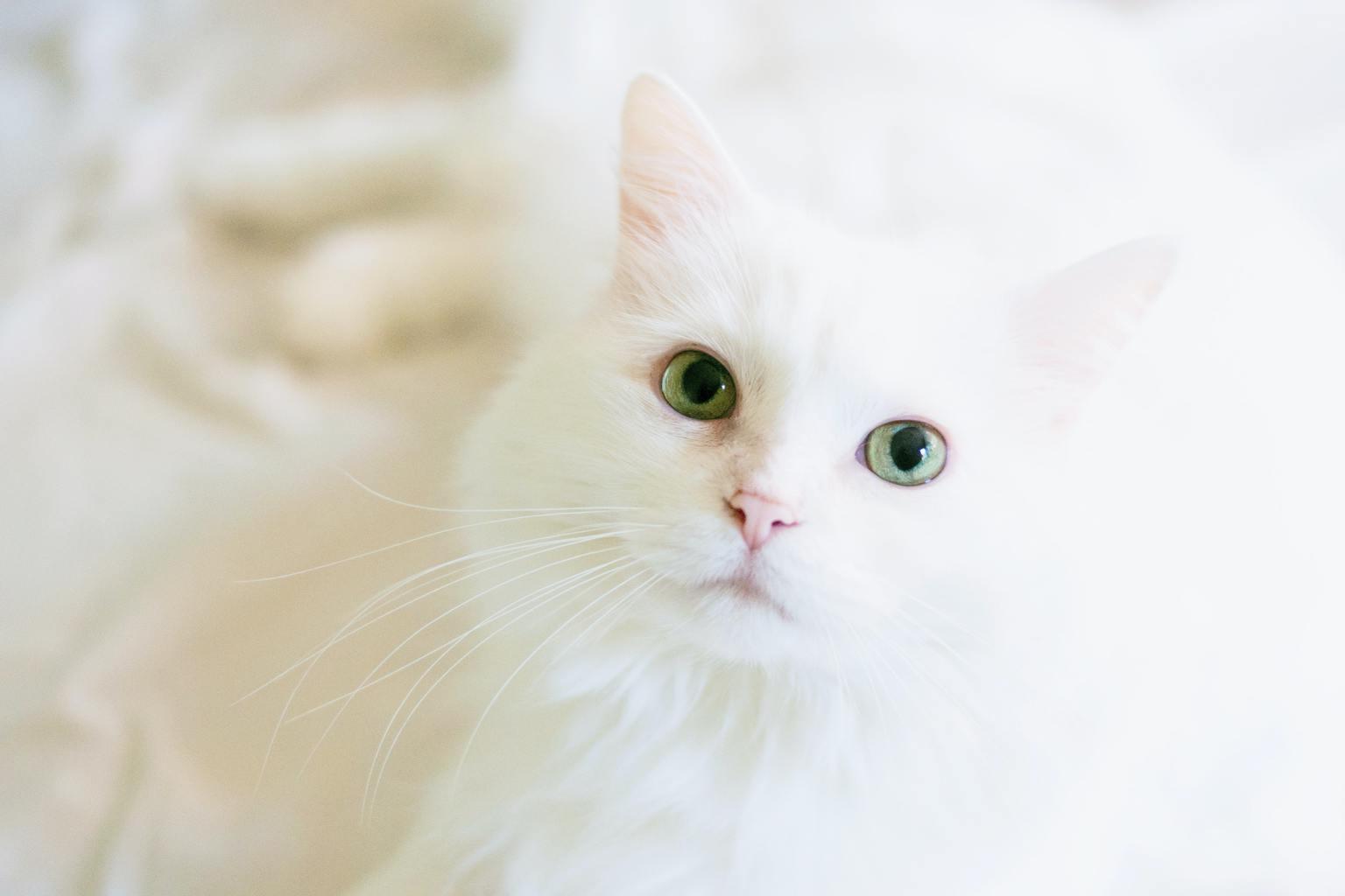 fotografía móvil en clave alta de gato