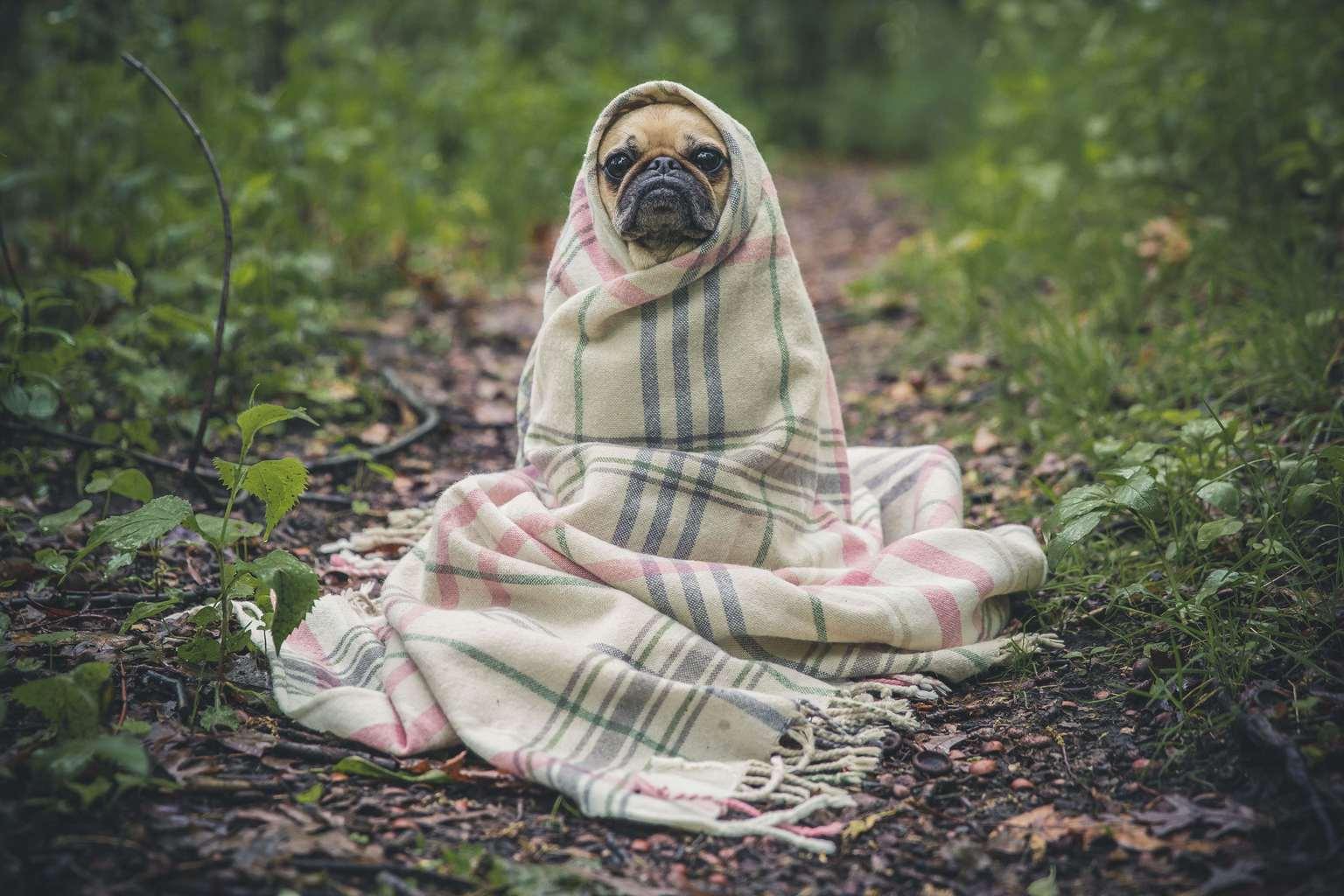 Perro abrigado para fotoreto80: frío