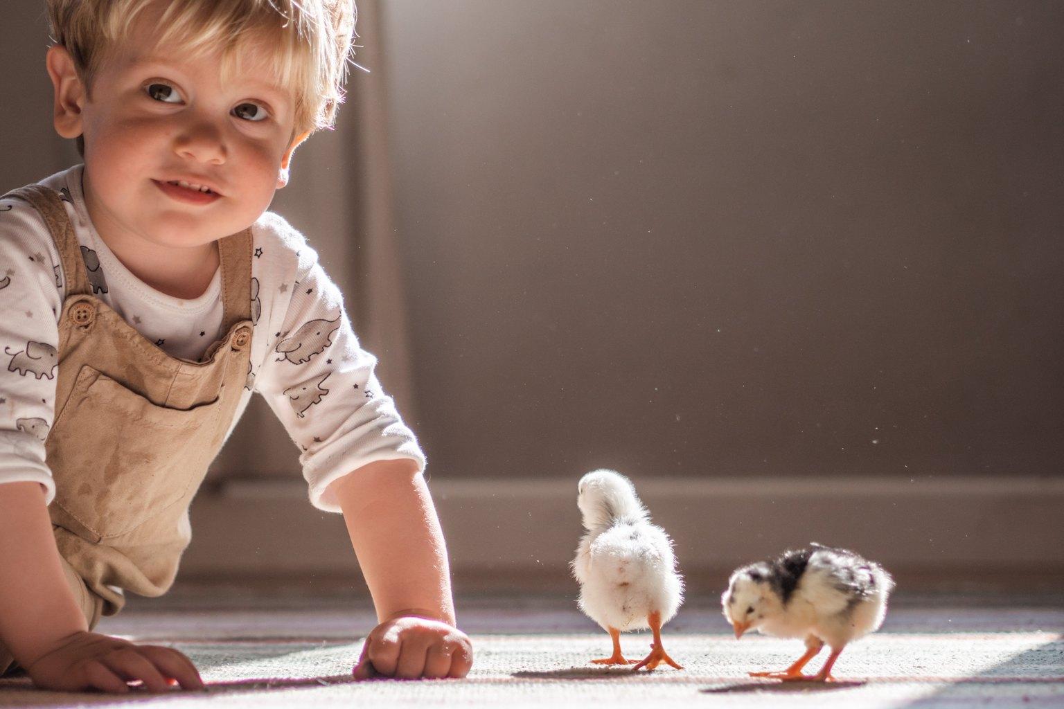 Fotografía de niño en casa con dos pollitos