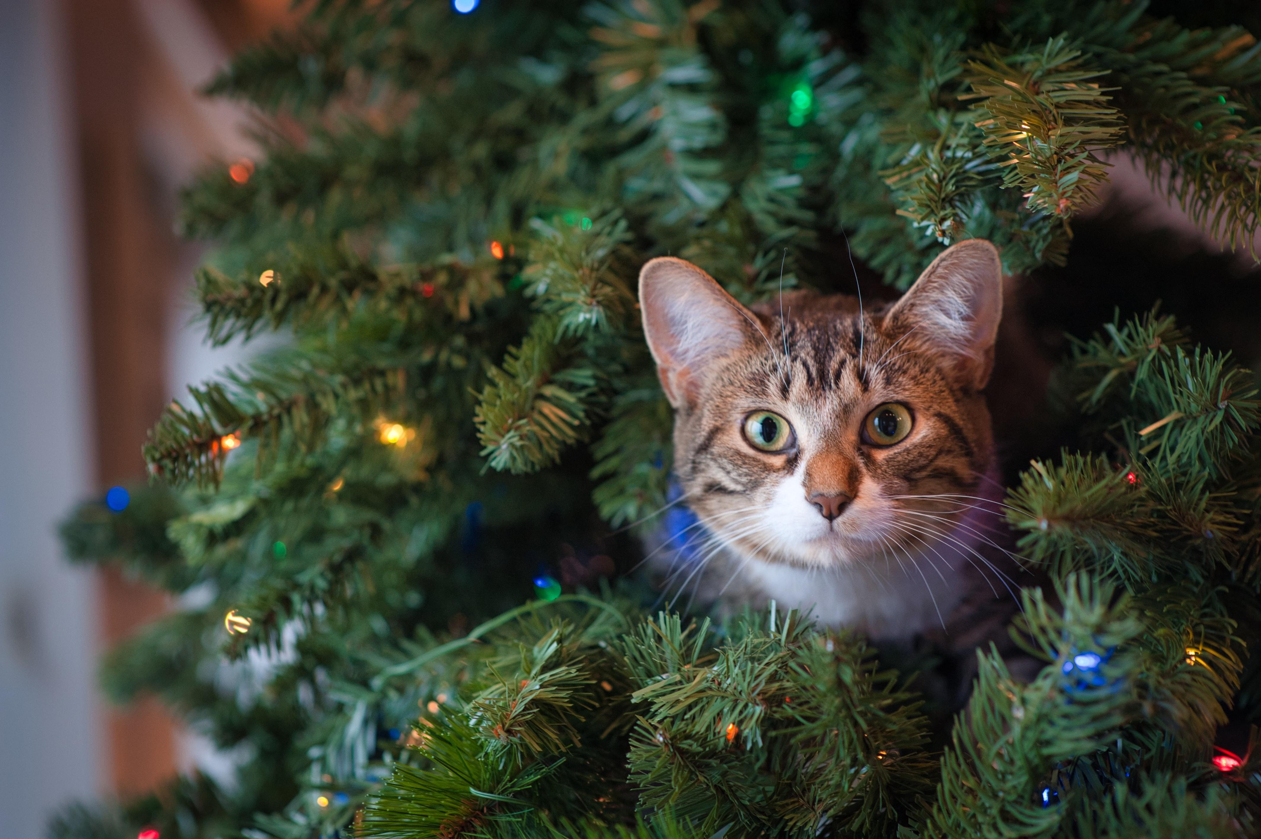 Gato metido en árbol de Navidad