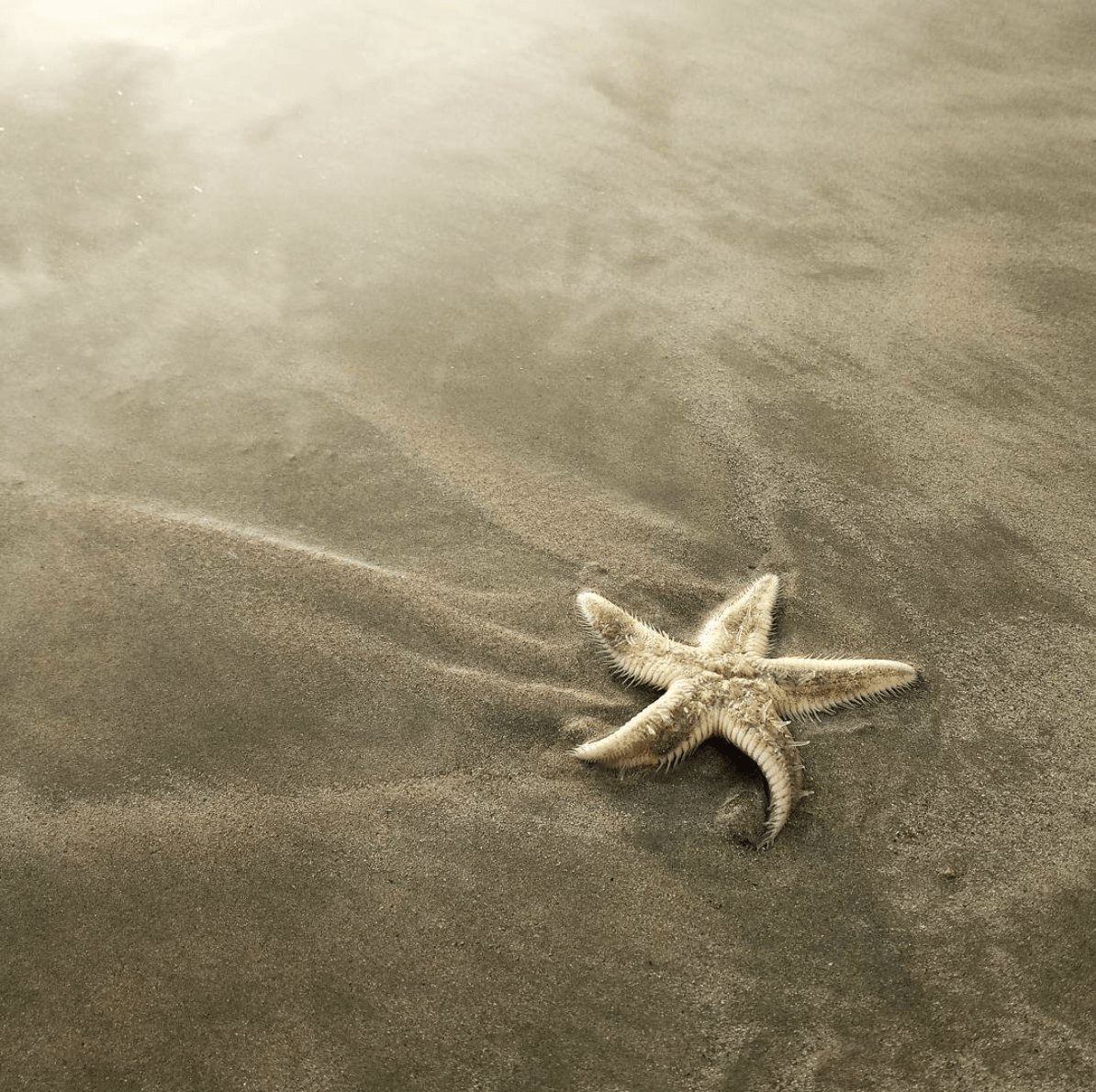 Texturas de estrella de mar en arena para fotoreto83