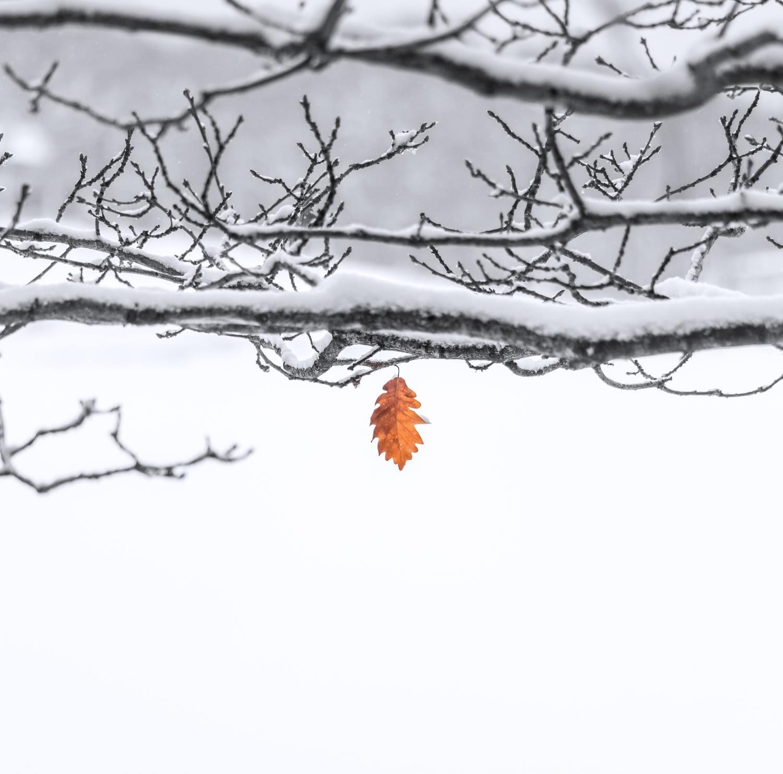 hoja fotografía nieve