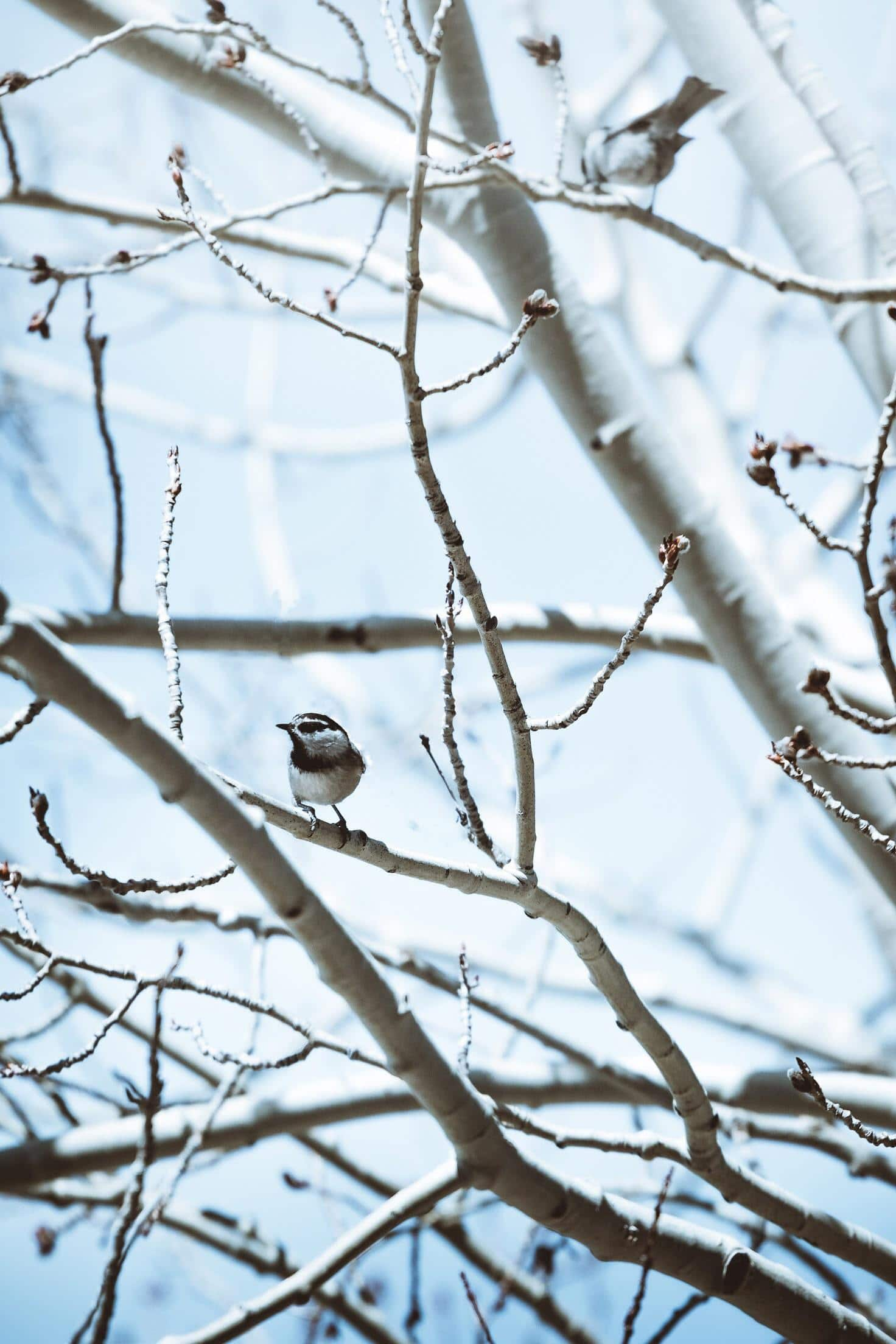 pájaro en ramas de árbol nevado