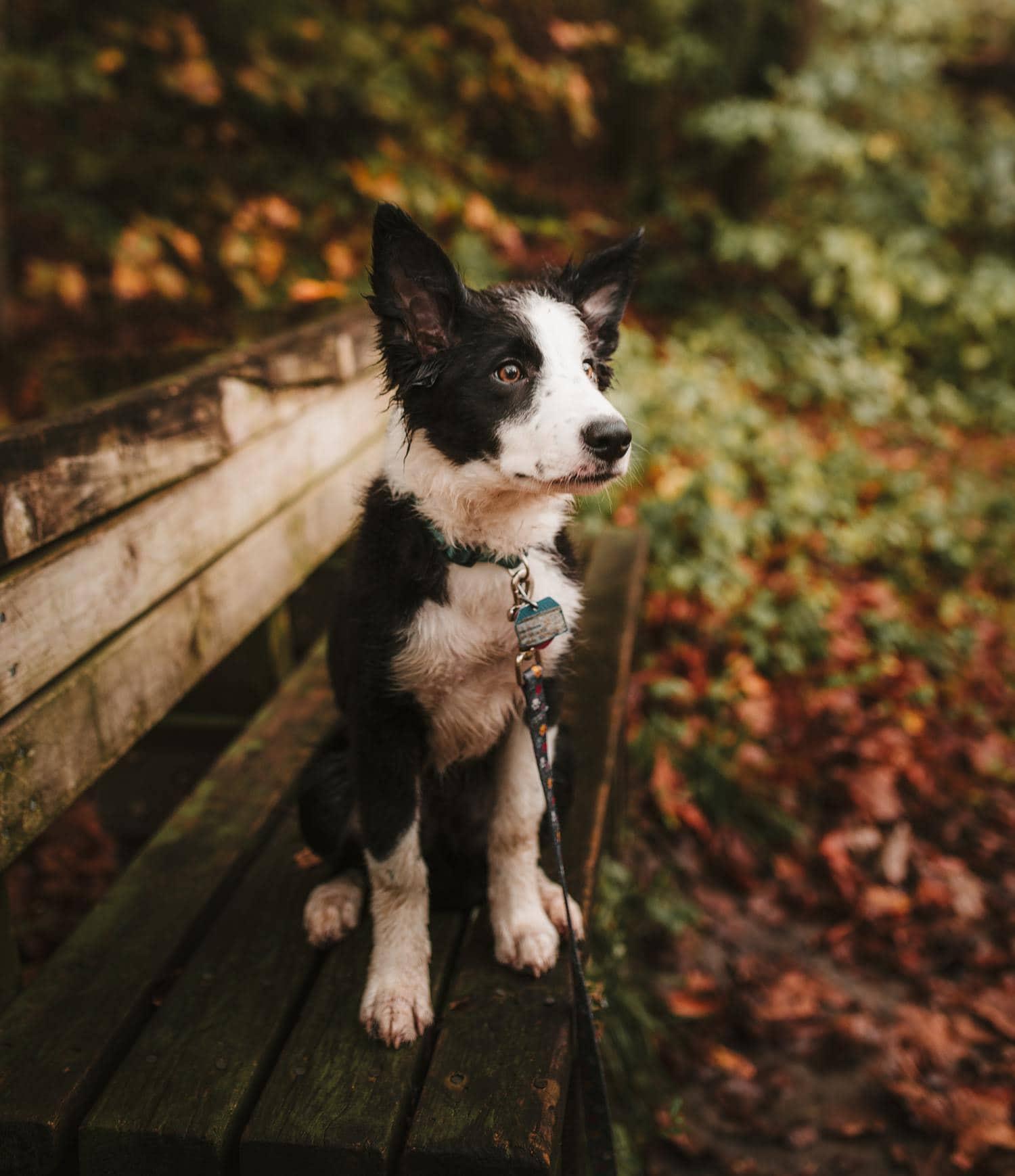 objetivo mascotas perro 35mm