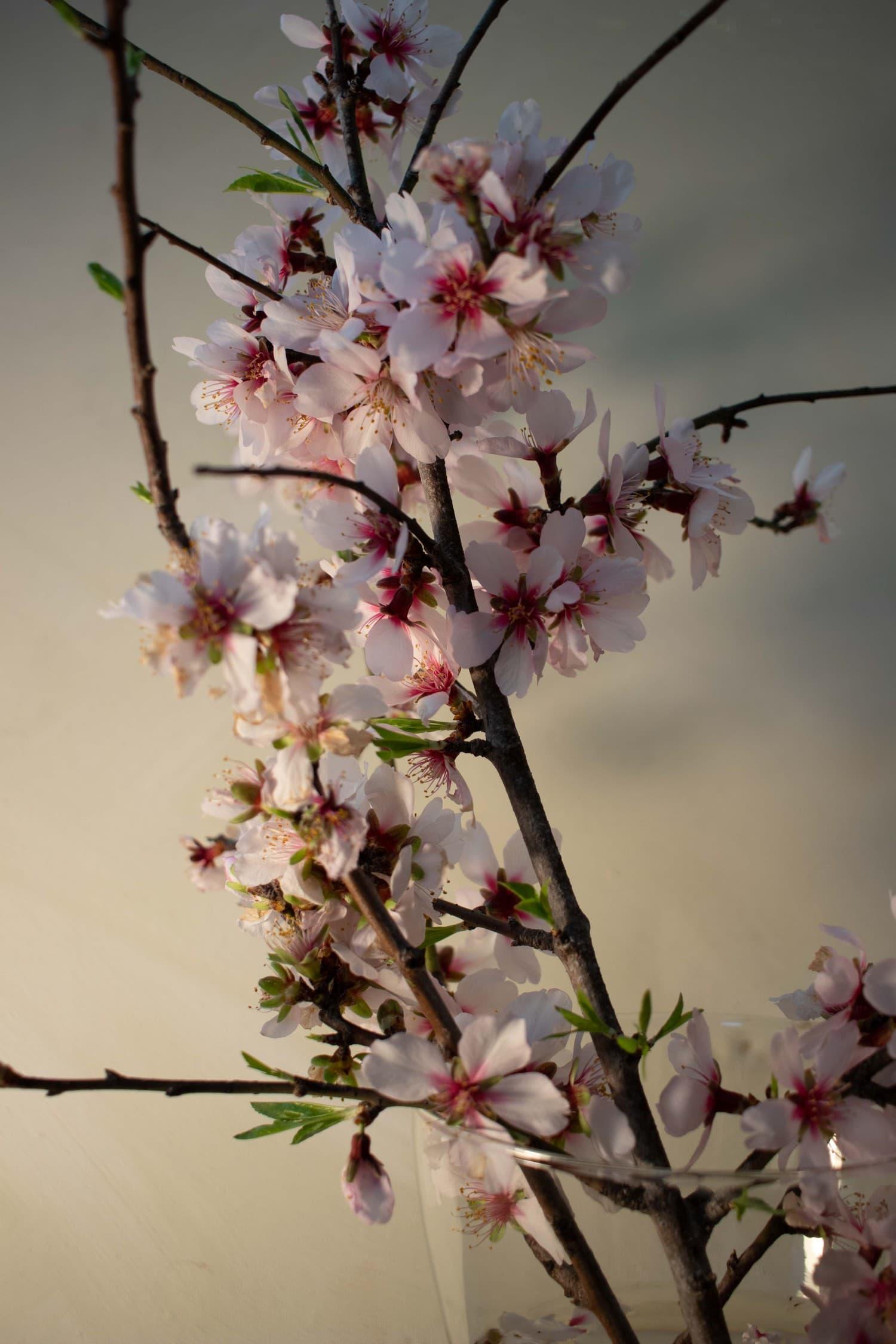 Flores con balance de blancos corregido con el modo Tungsteno
