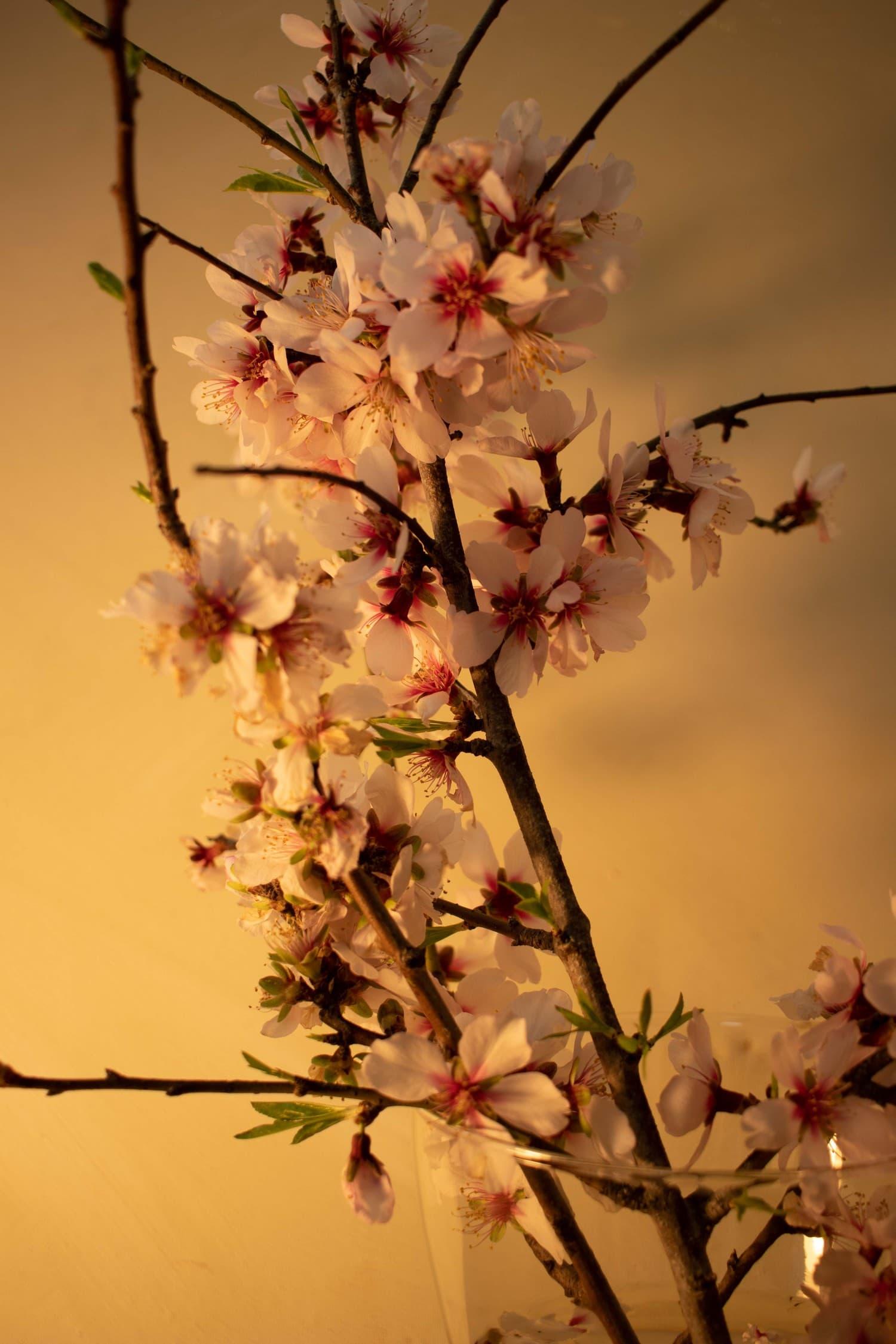 Flores con temperatura de luz cálida