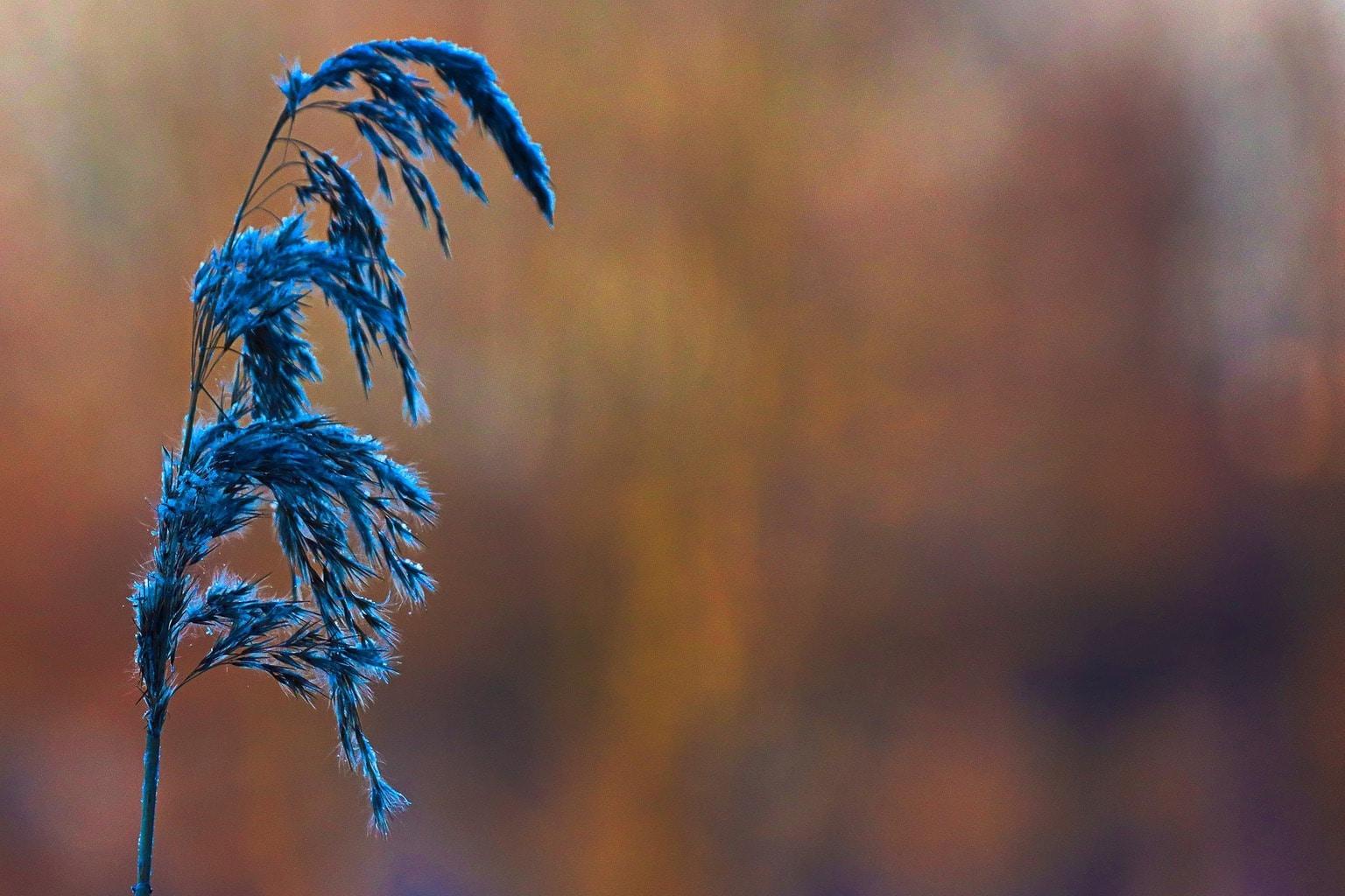 Fotografía de naturaleza con la 90D de Canon