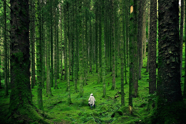 Bosque verde para el fotoreto90