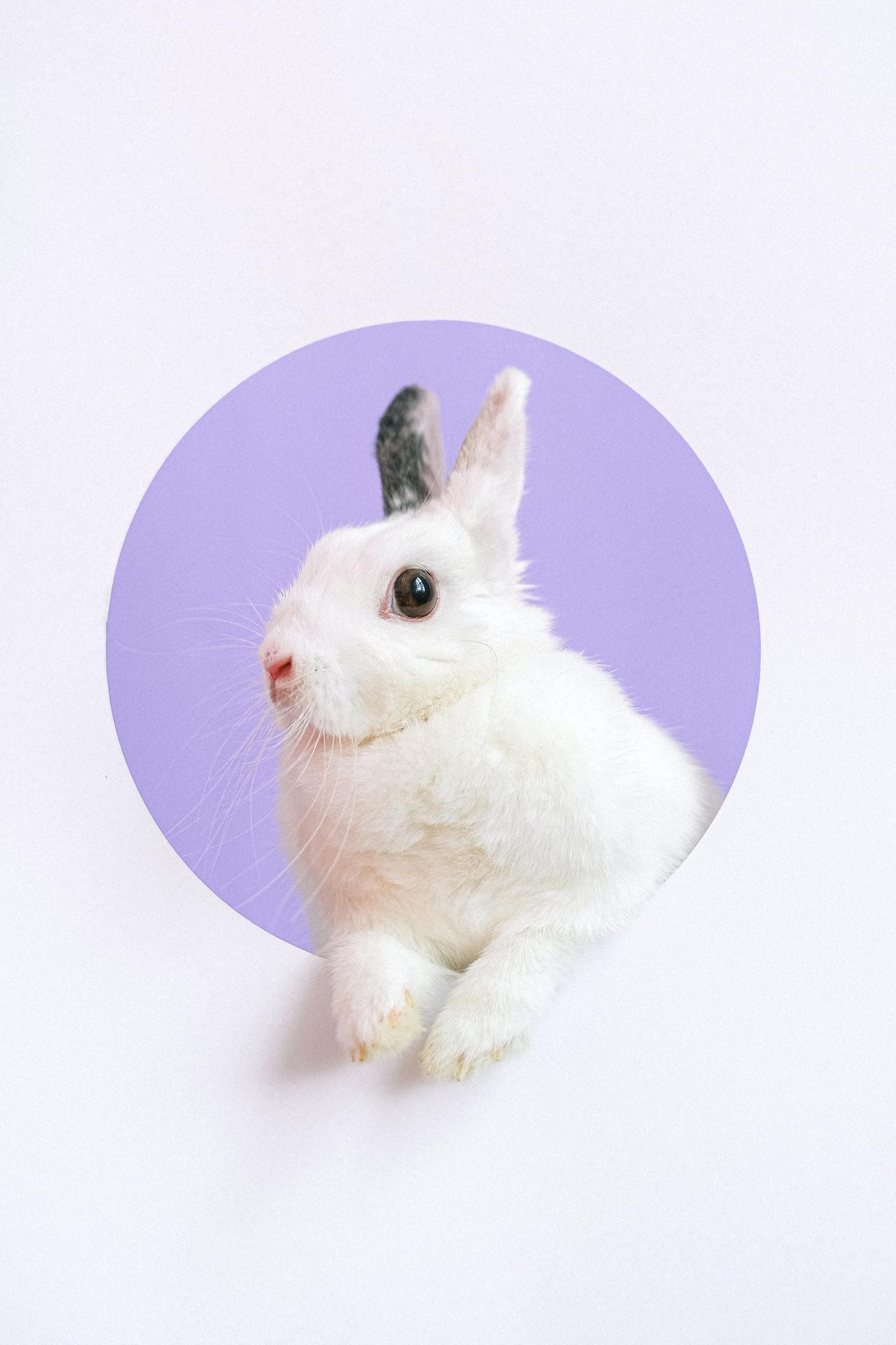 conejo lila