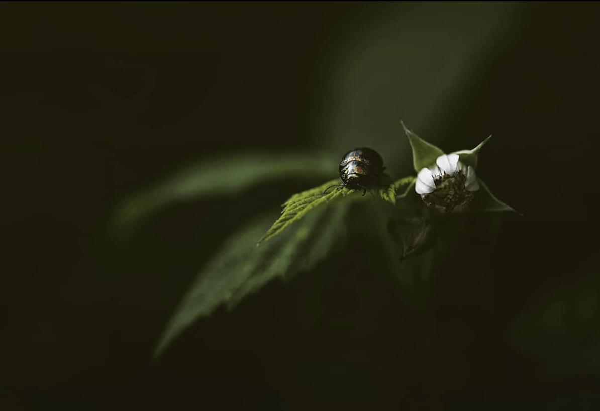 Fotografía de naturaleza para el fotoreto90: verde