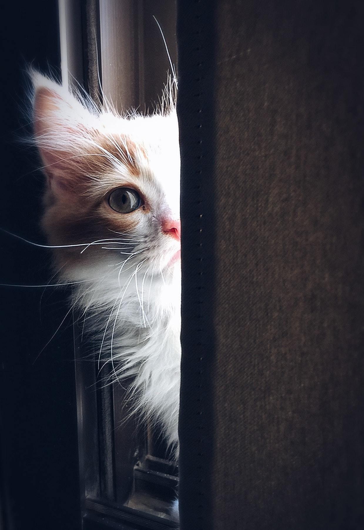 gato mascota luz ventana