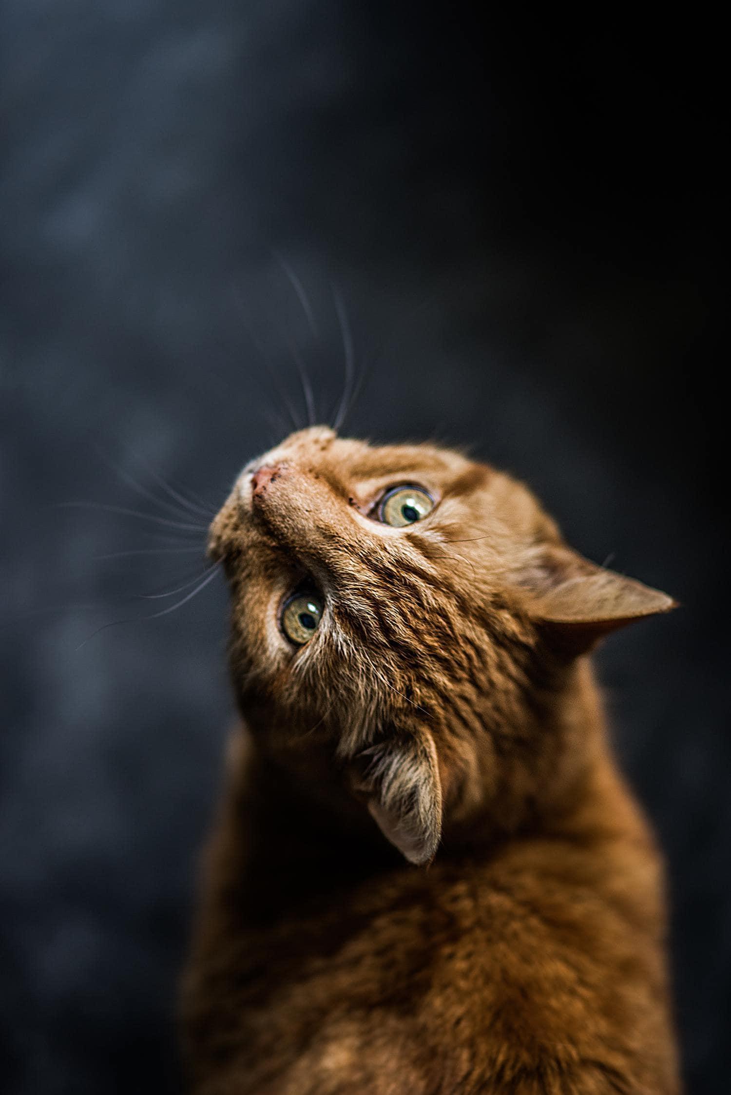 gato vertical