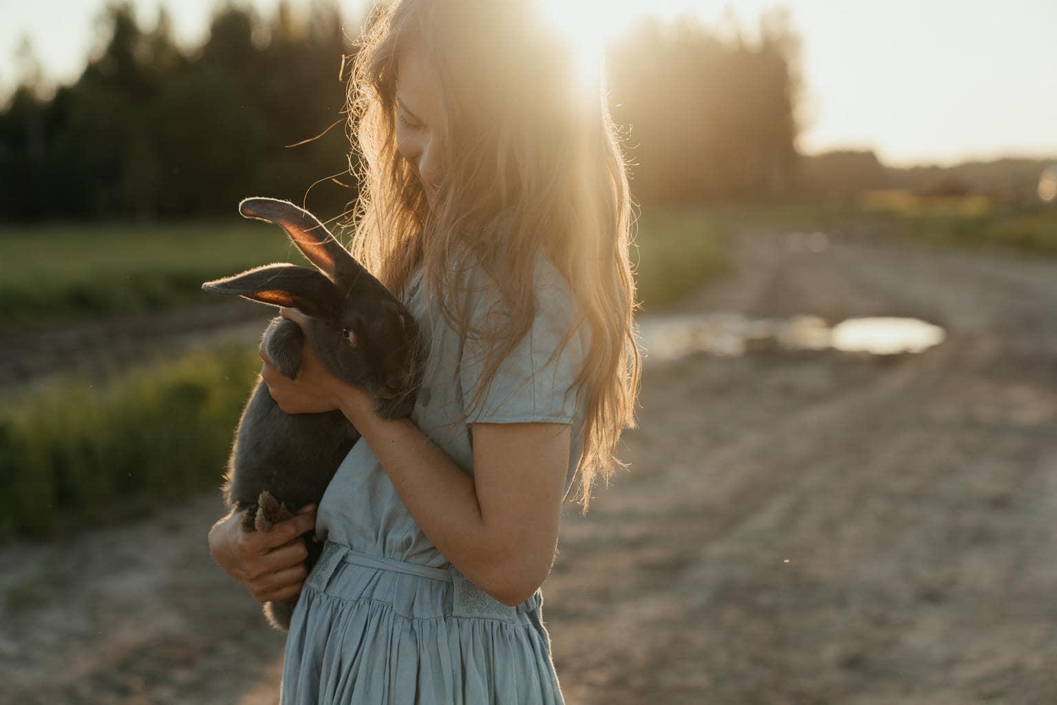mascota conejo atardecer