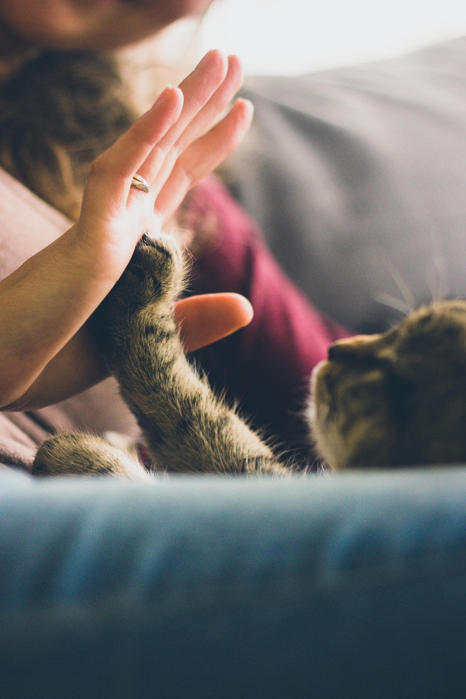 manos pata