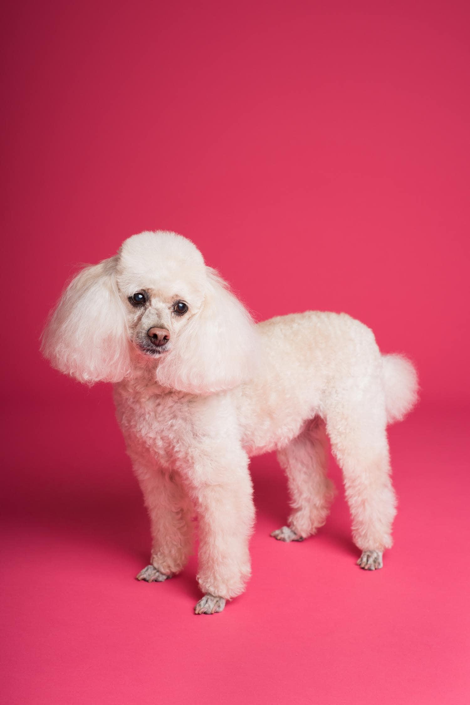mascota fondo rosa