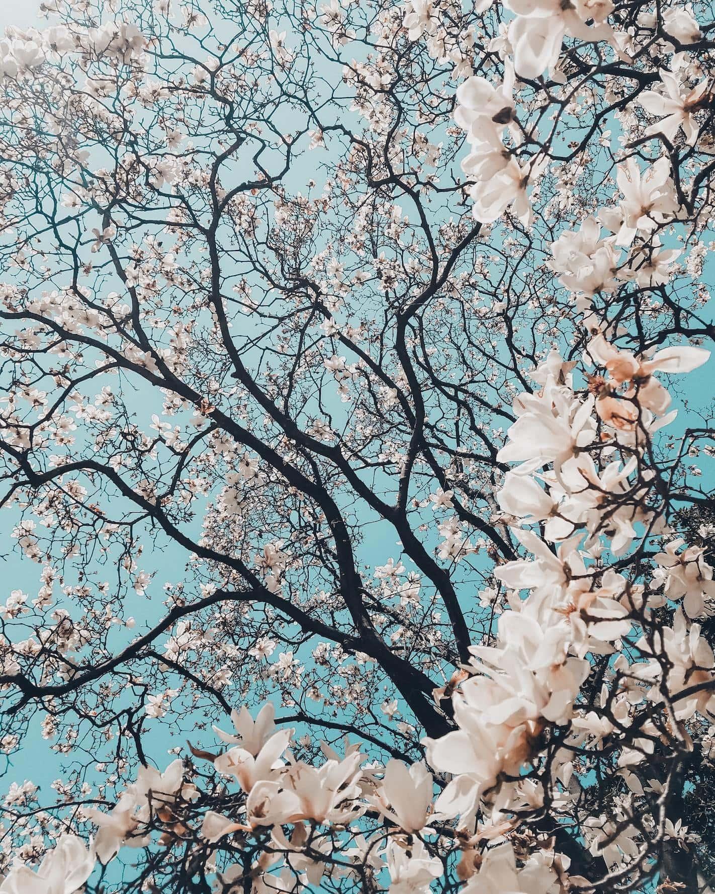 Ramas de árboles en flor