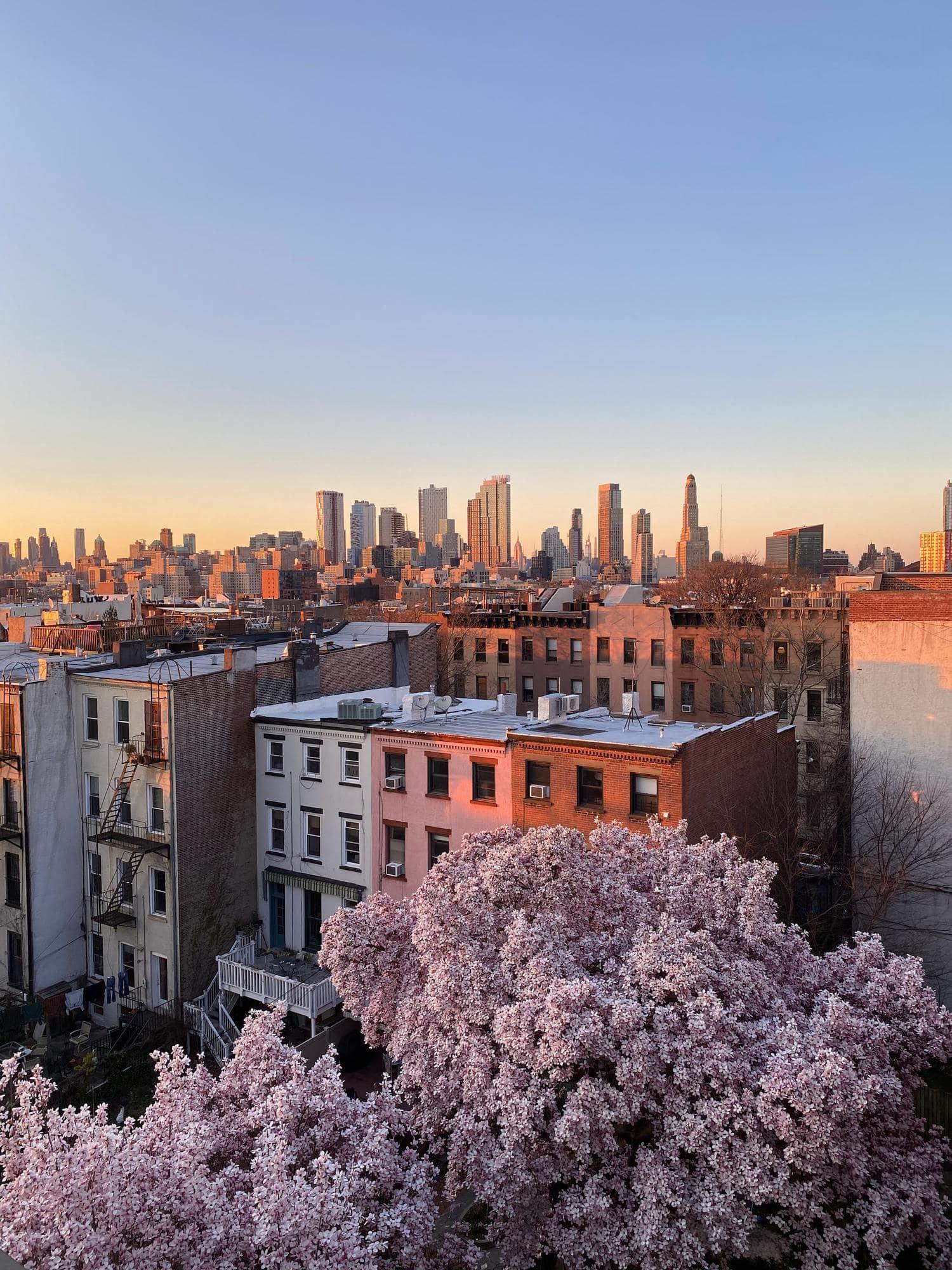 Ciudad en primavera con árboles en flor