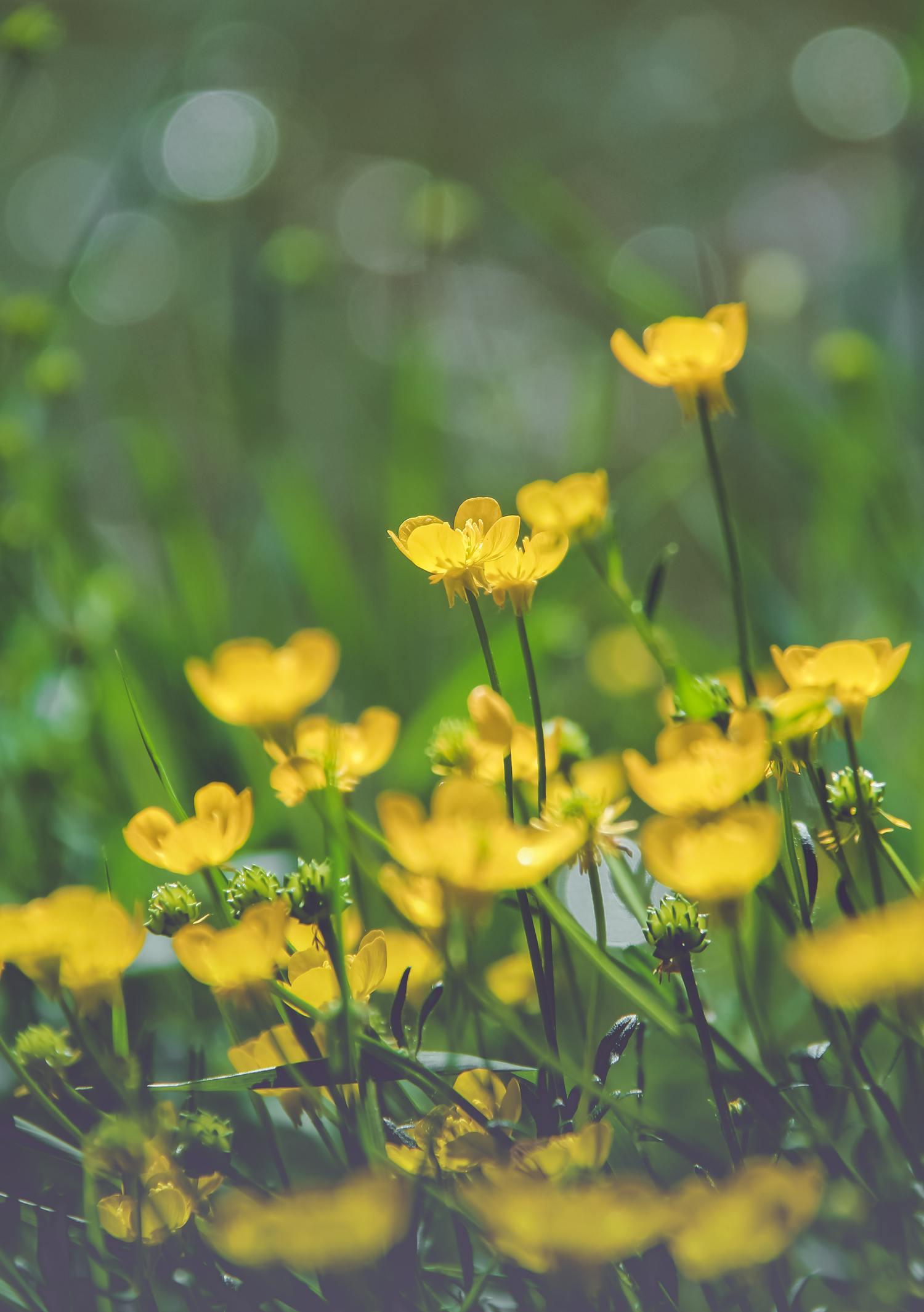 Flores amarillas con bokeh