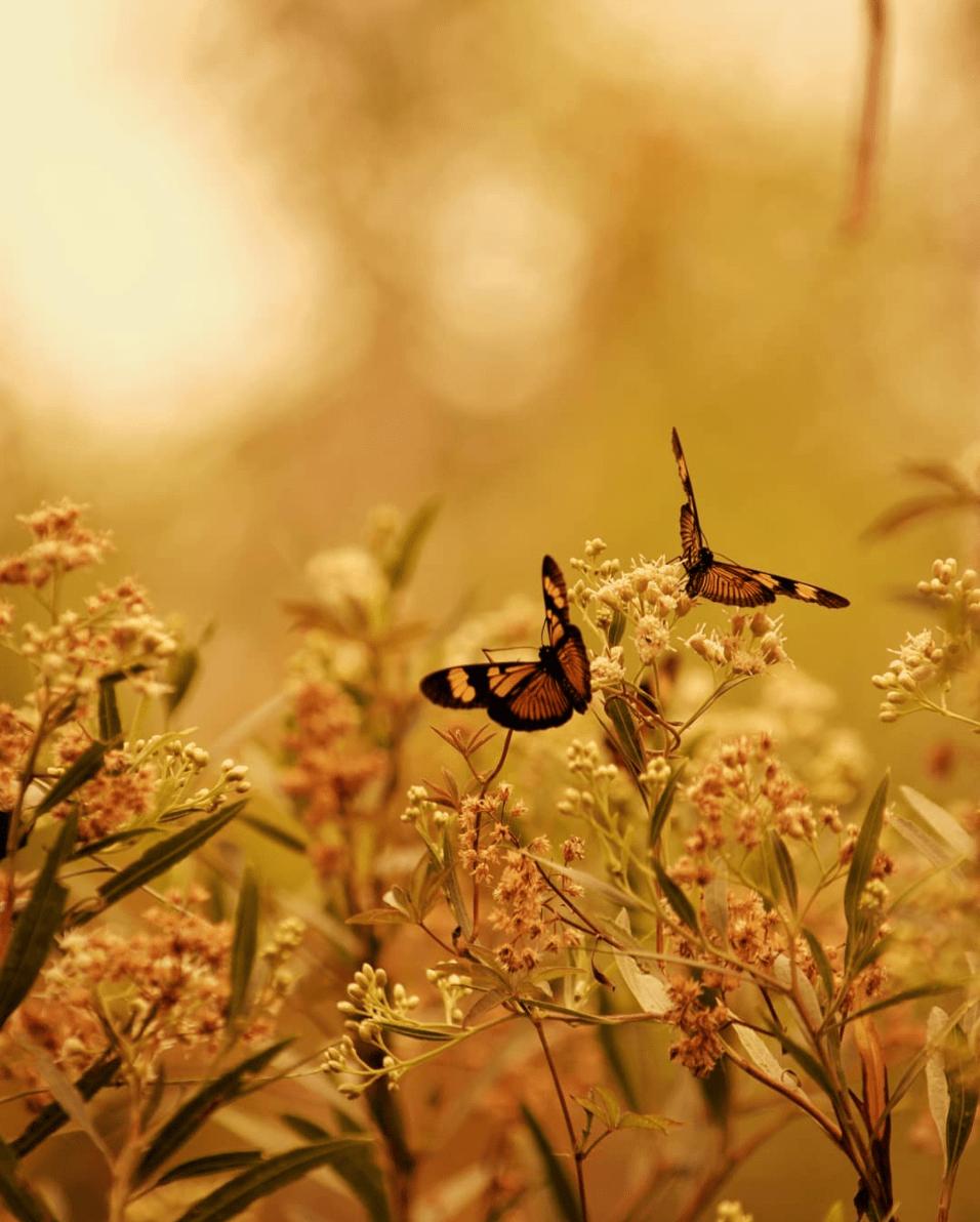 Mariposas ganadora de fotoreto94 primavera
