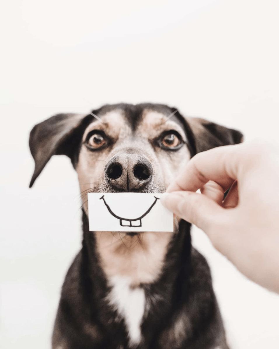 Sonrisa de perro ganadora fotoreto95