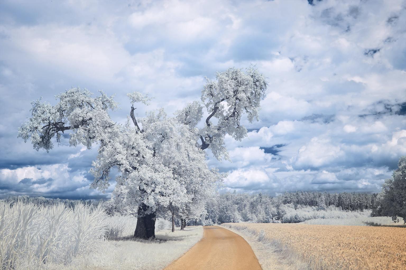 Fotografía infrarroja en primavera
