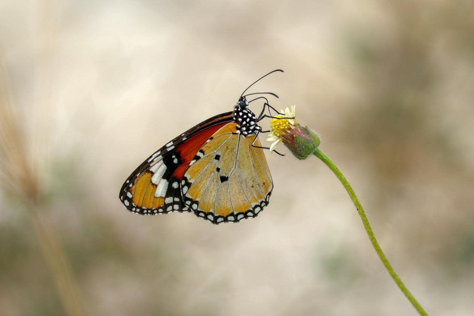Mariposa con luz difusa
