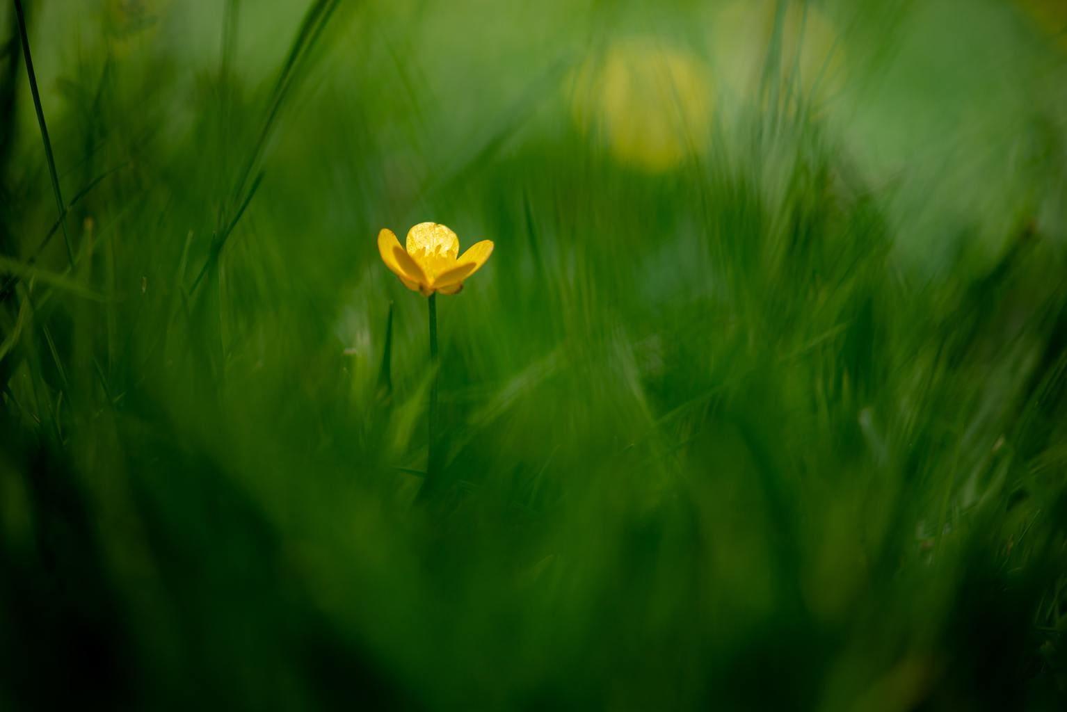 primavera flor aislada