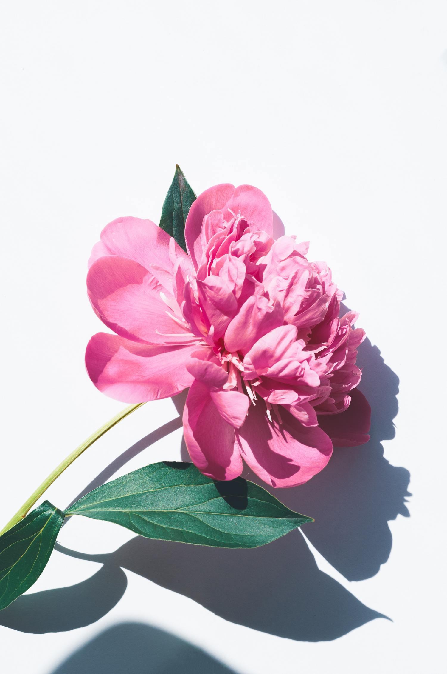 flor clave alta