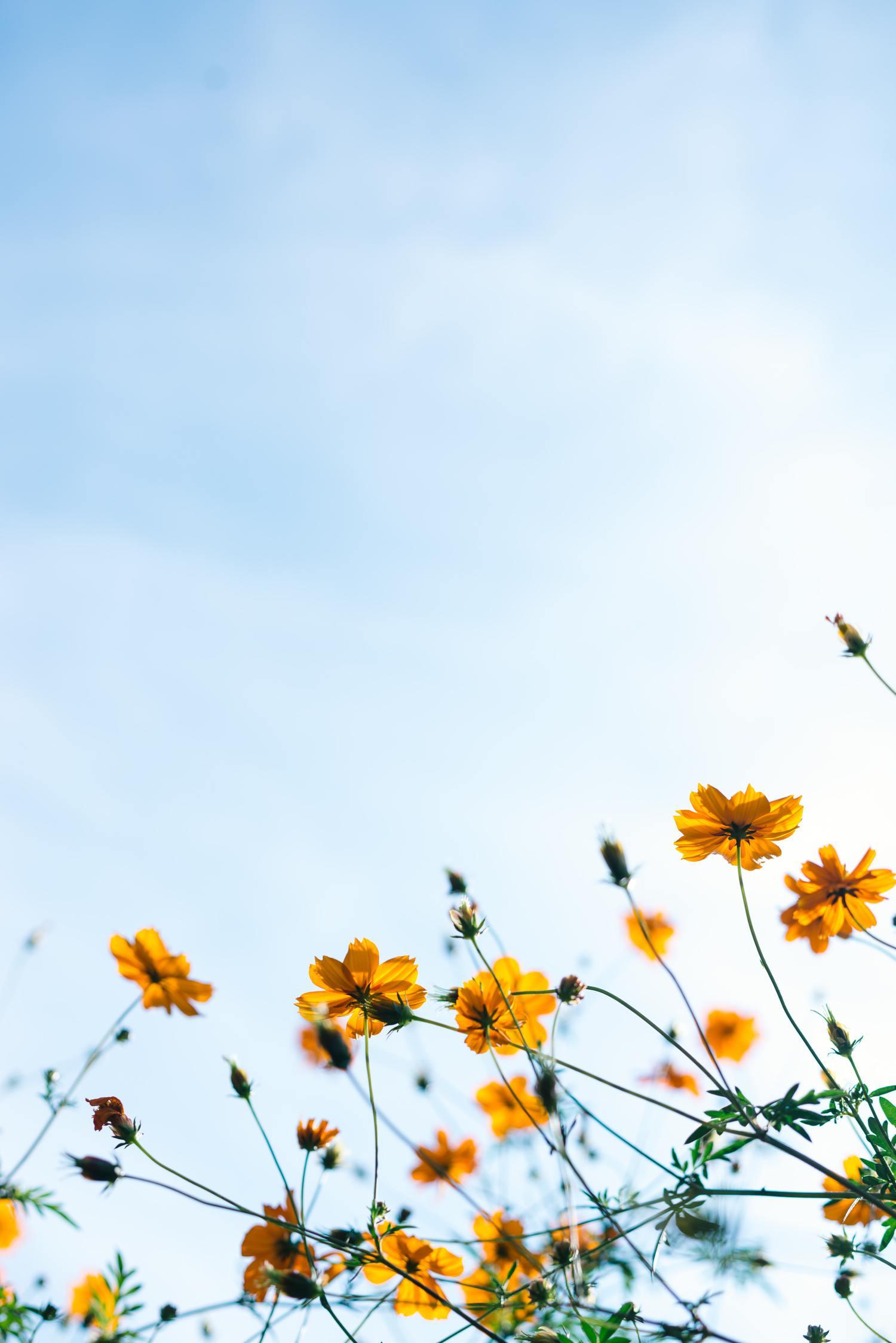 flores amarillas primavera