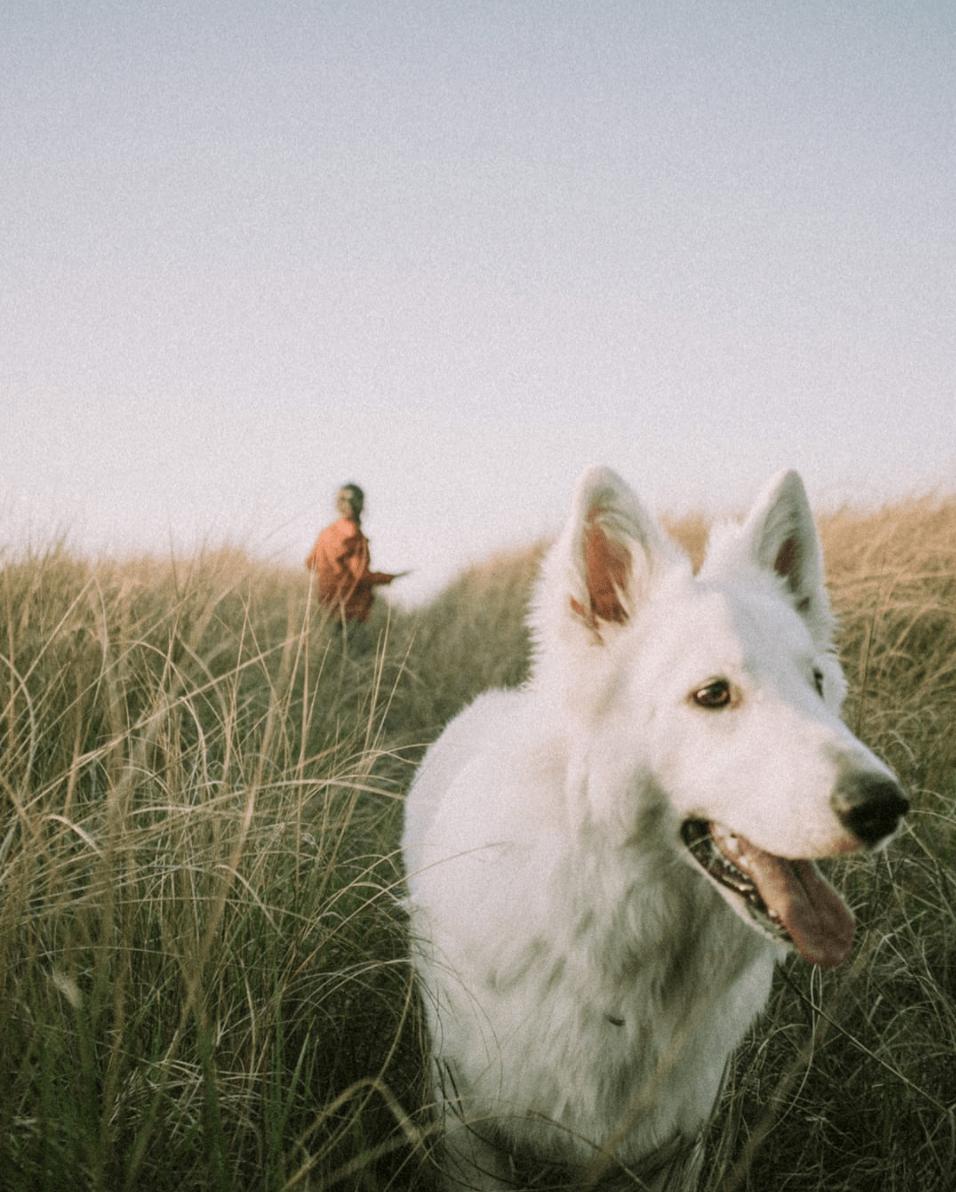 Fotografía de perro al atardecer ganadora del Fotoreto101