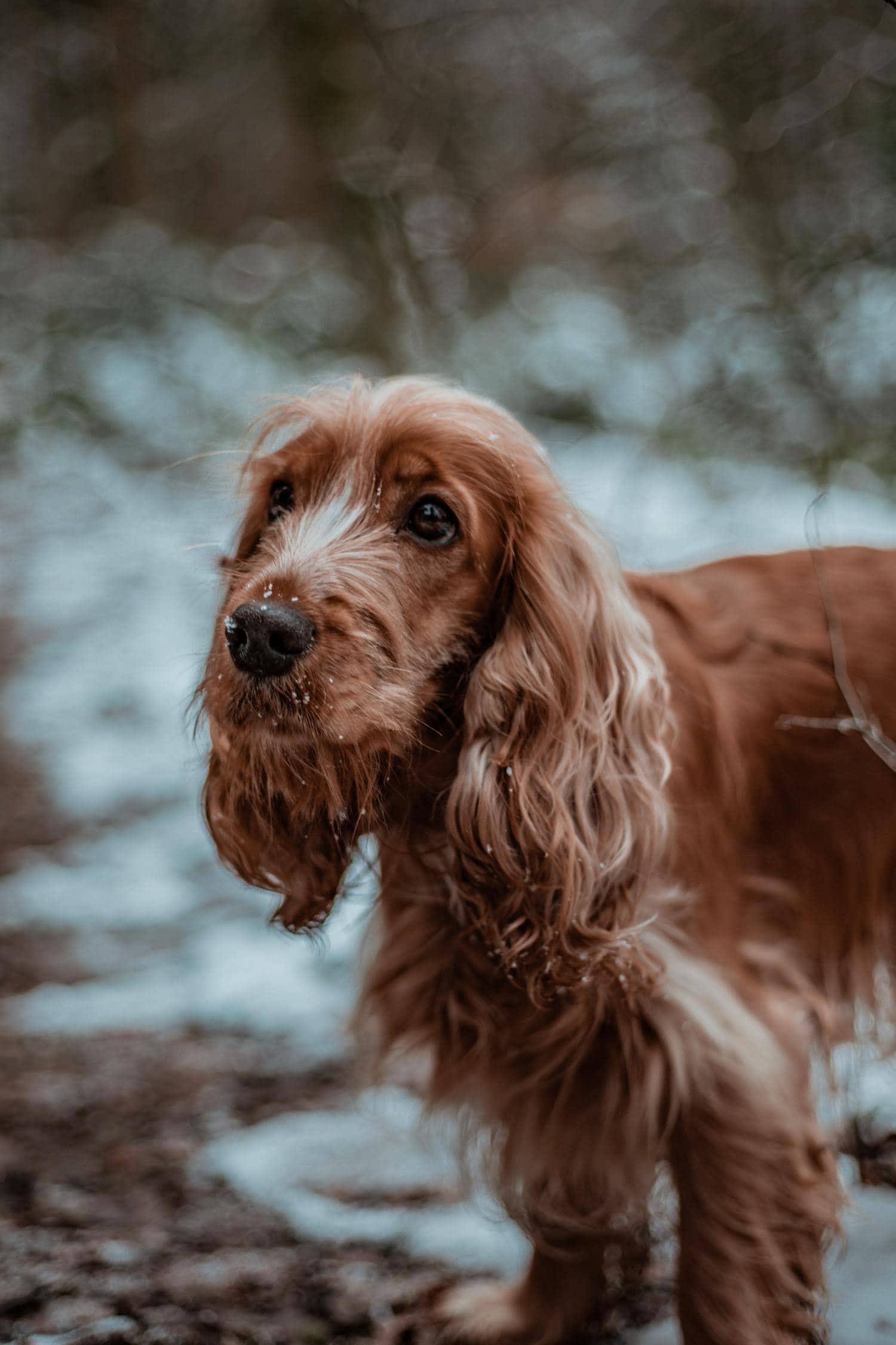 Perro con profundidad de campo pequeña