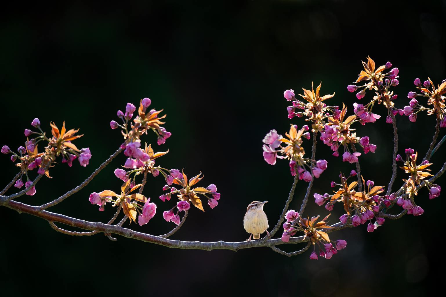 flores fondo oscuro