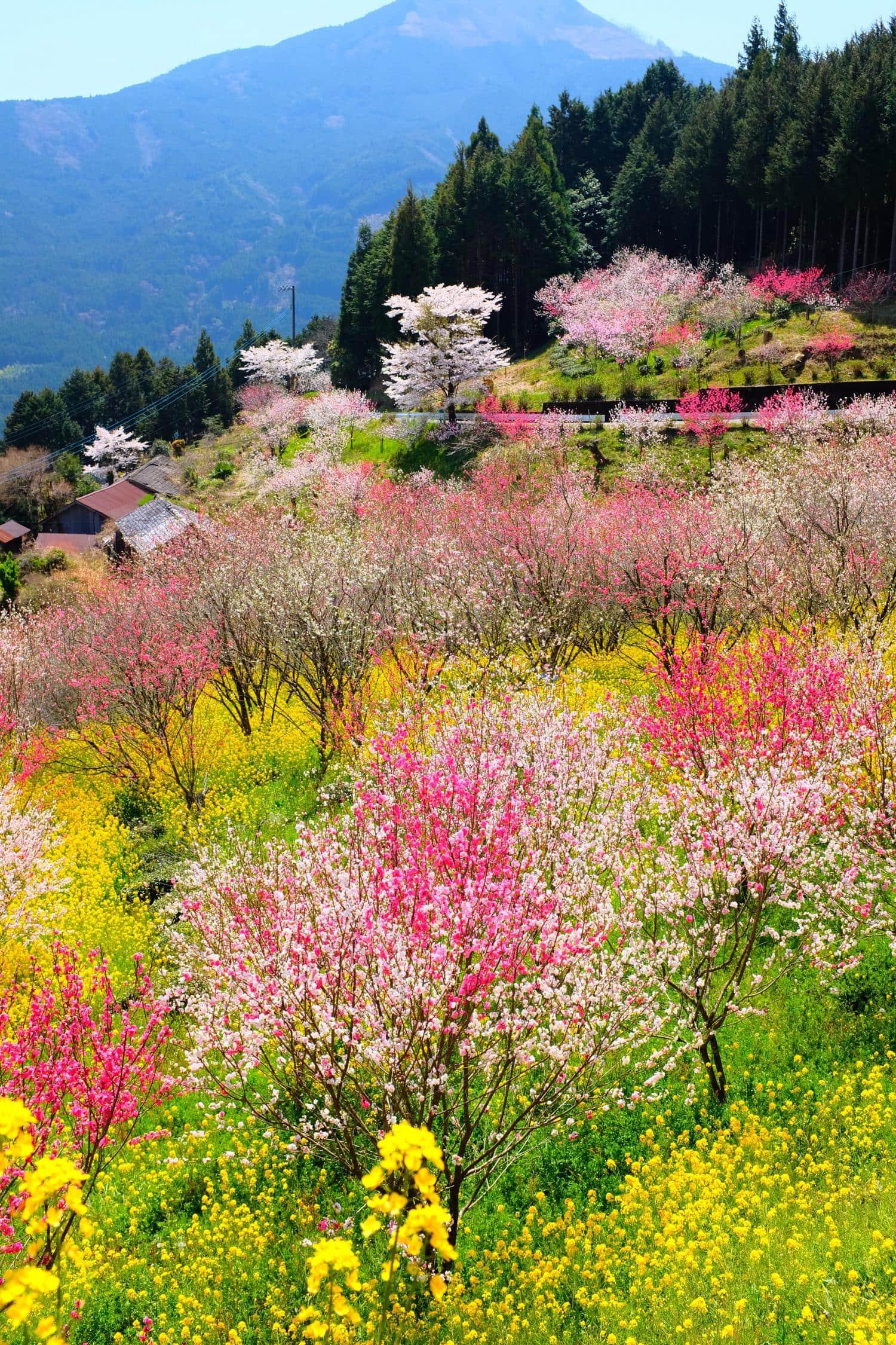primavera paisaje de árboles en flor