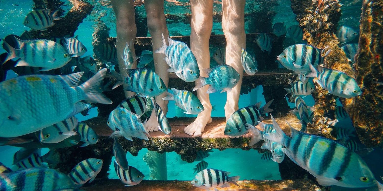 Pies y peces bajo el agua