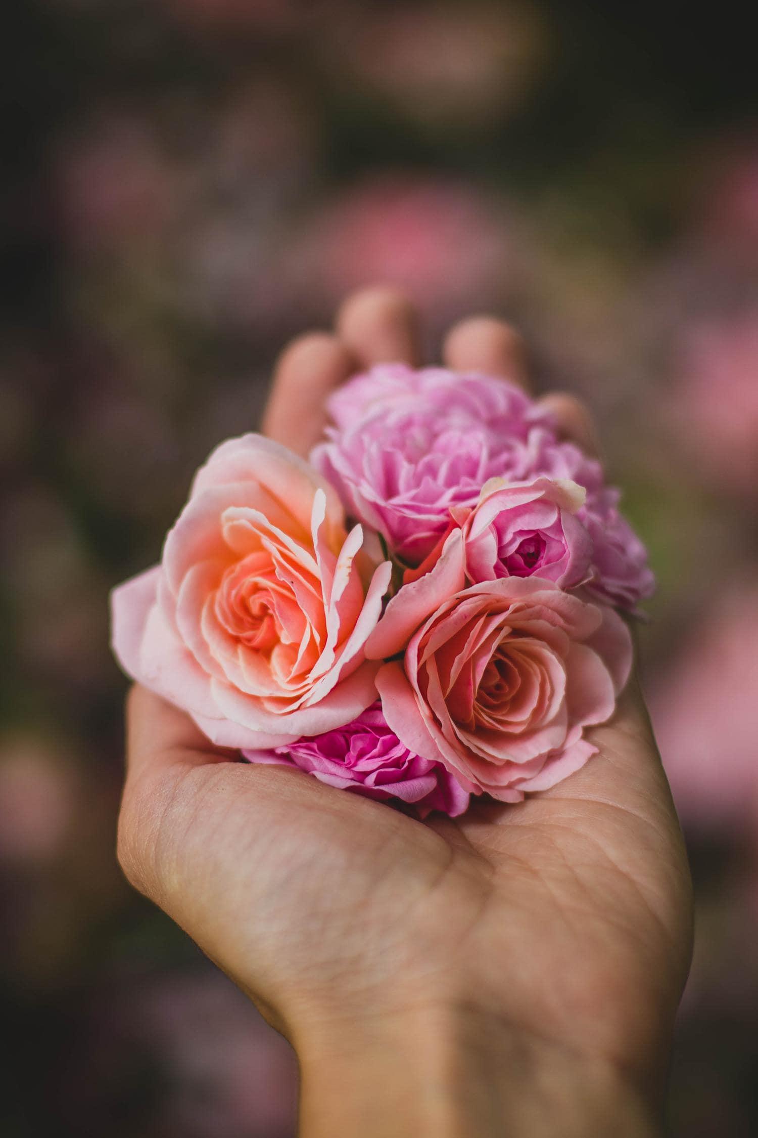 mano rosas