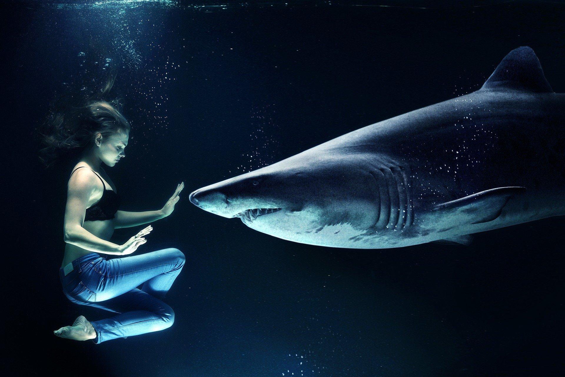 Montaje de mujer bajo el agua delante de tiburón