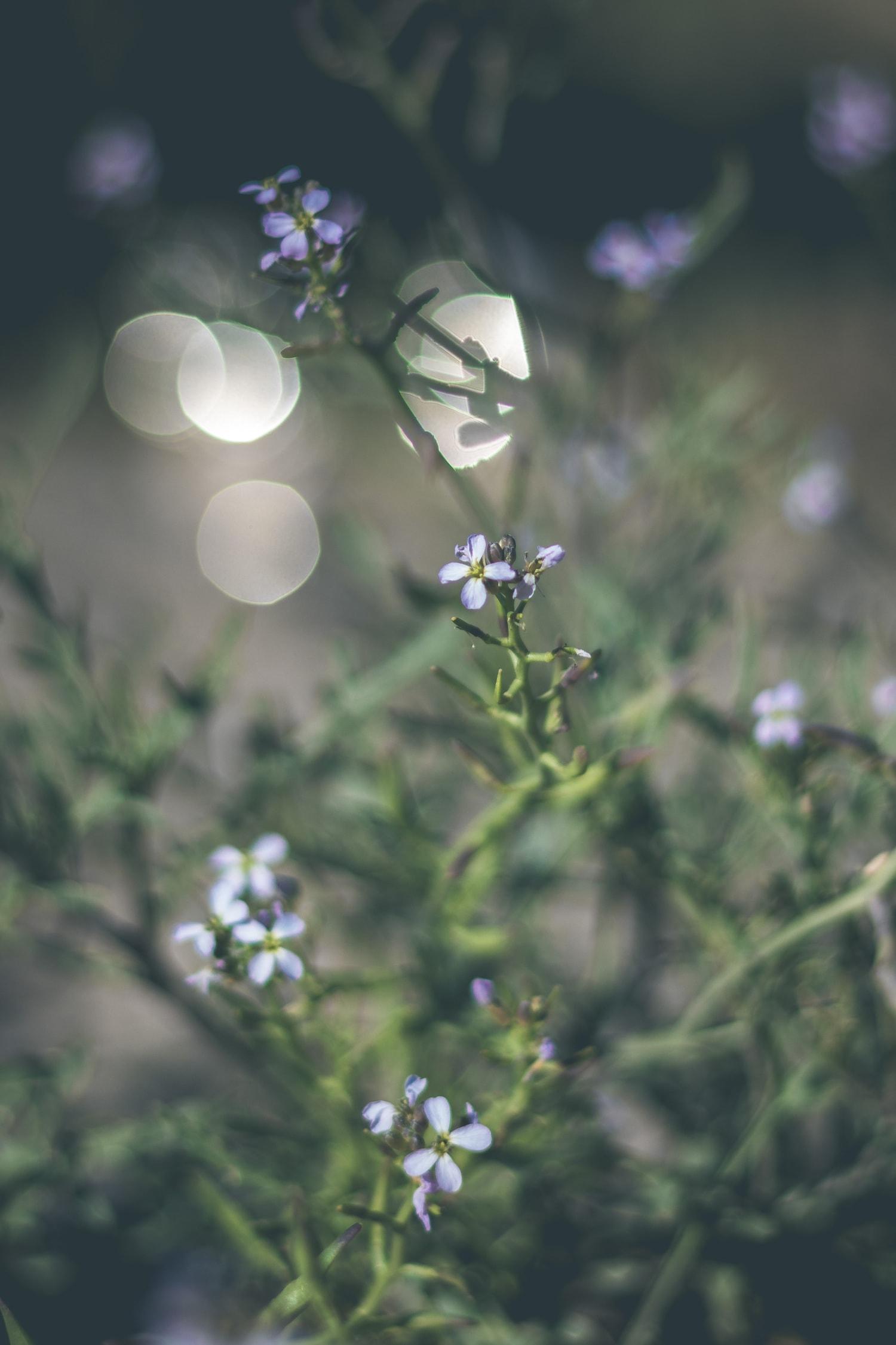 Fotografía de plantas con bokeh