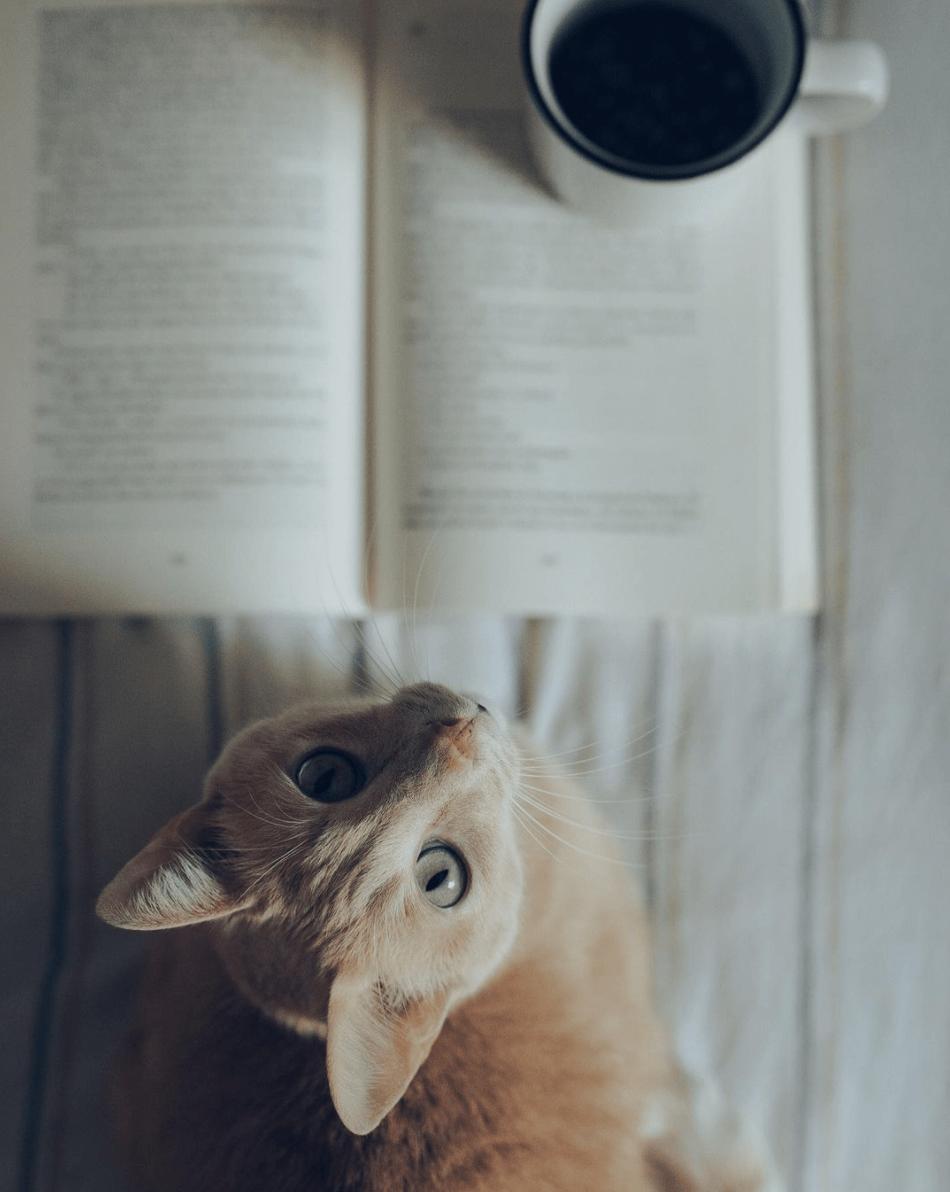 Foto de gato ganadora del fotoreto106