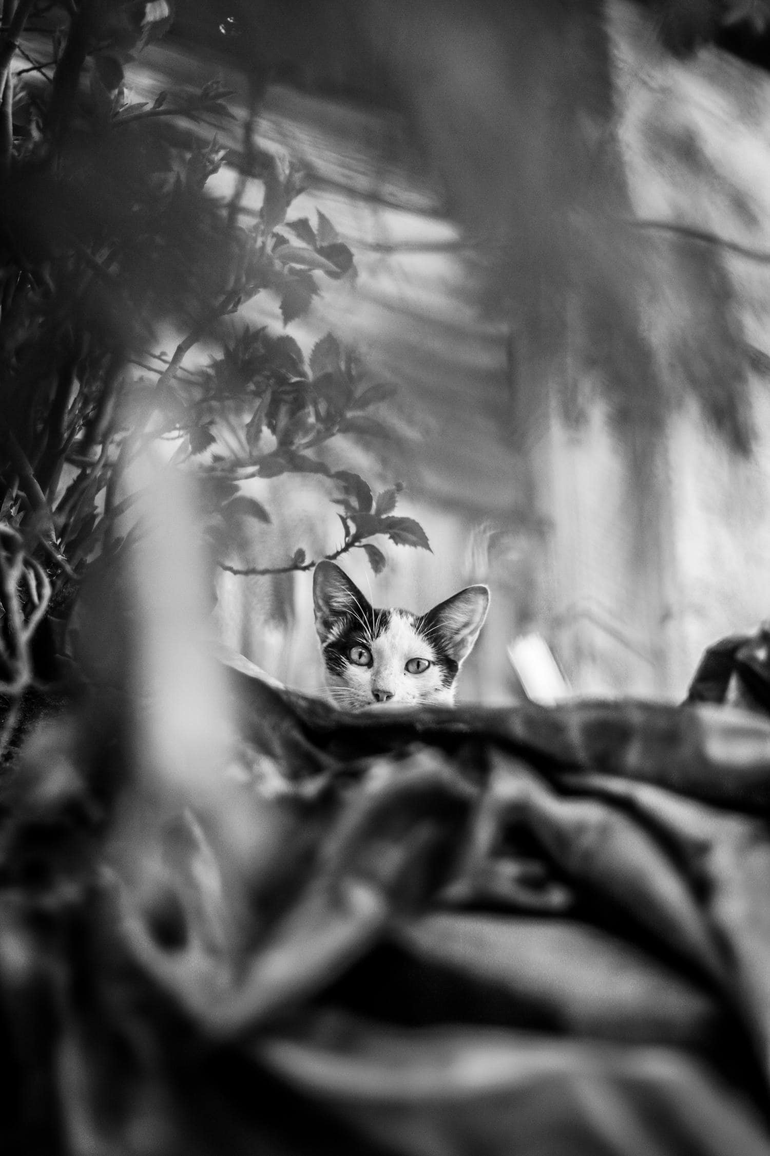 Gato fotografiado con 50mm de Nikon