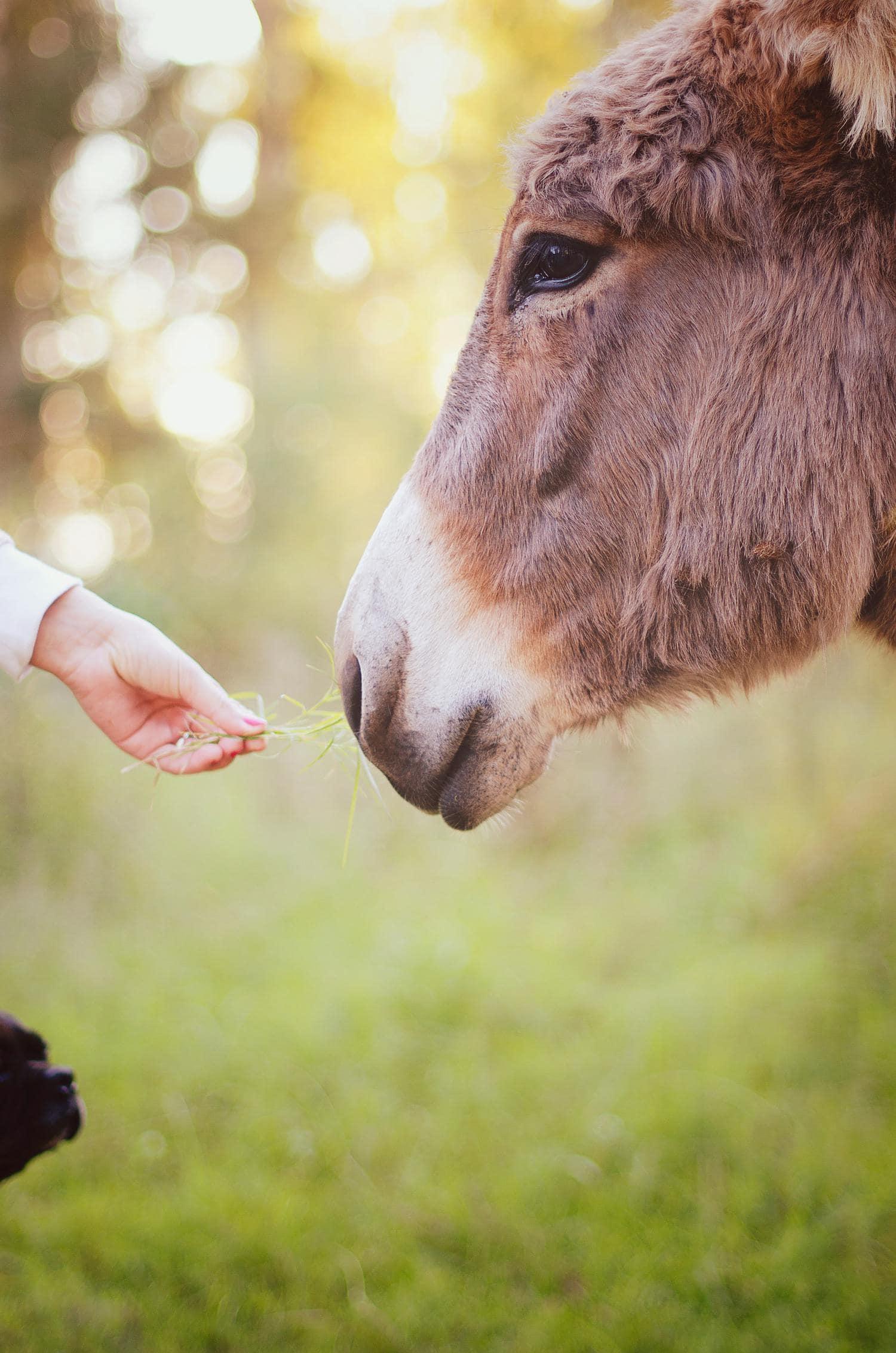 burro y mano fotografiadas con nikon 50mm