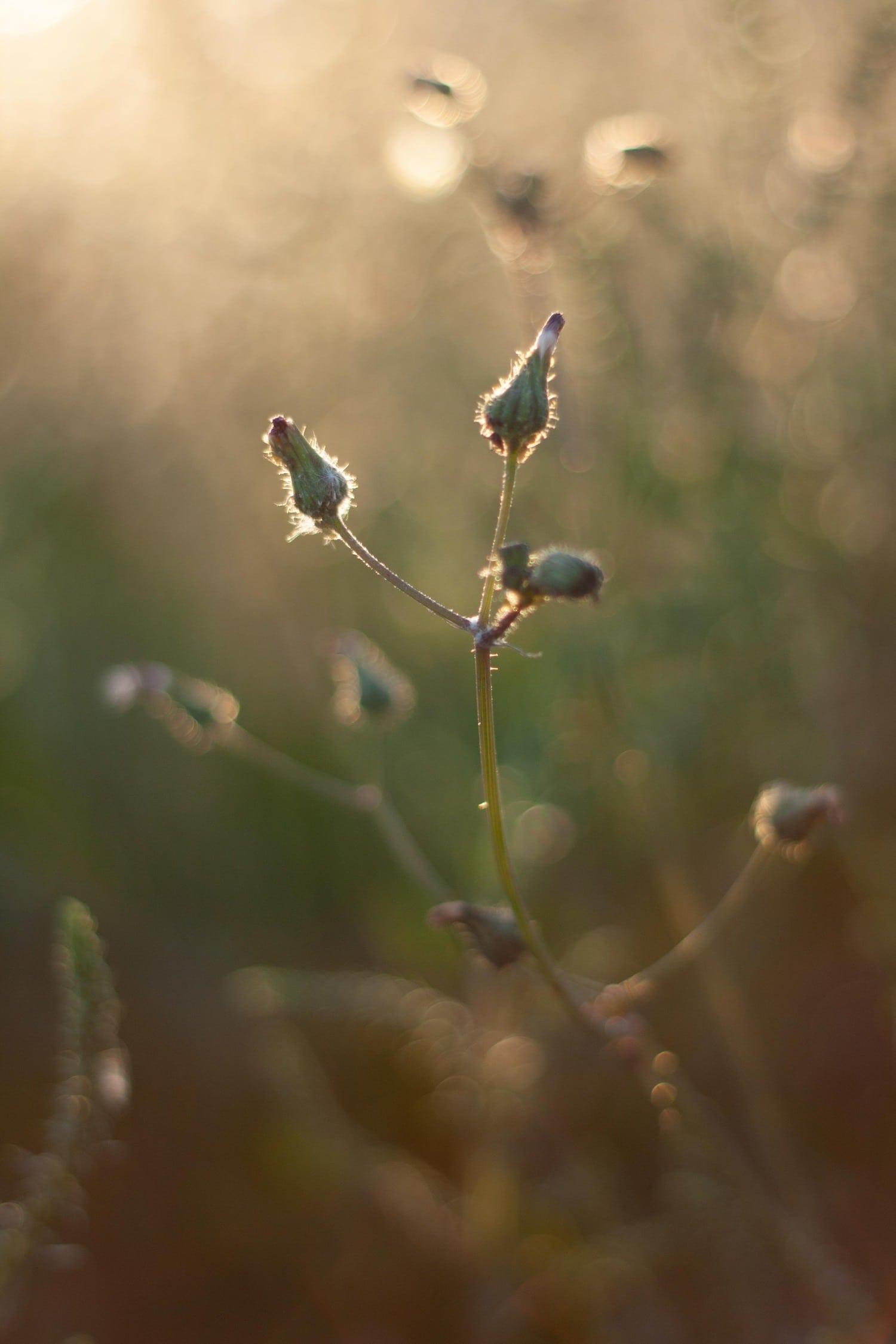 Planta con apertura amplia