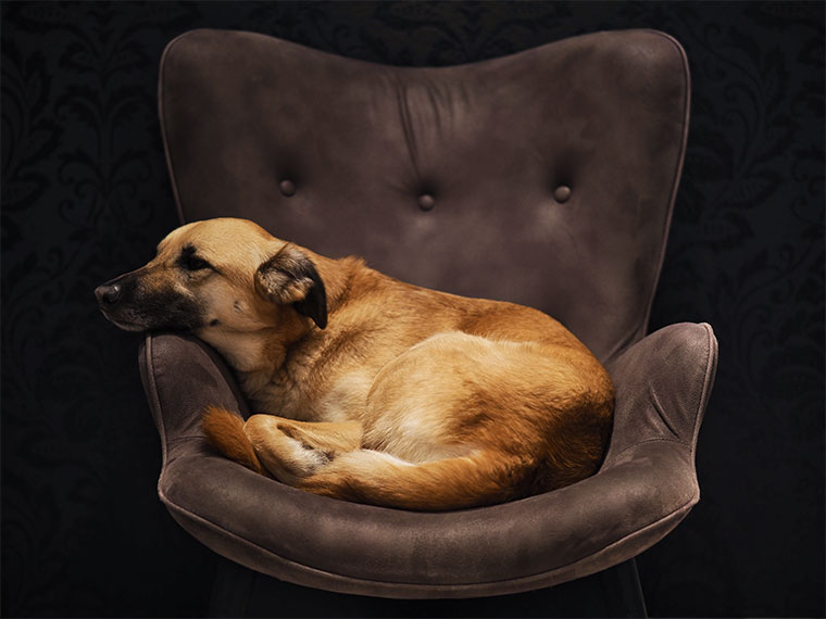Imagen de ejemplo de perro tomada con Olympus OM-D E-M10 IV