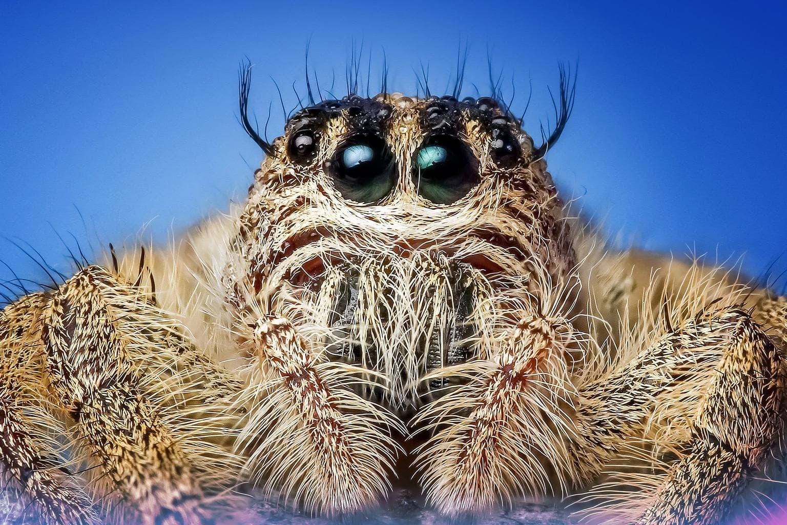 Araña con objetivo macro muy magnificado