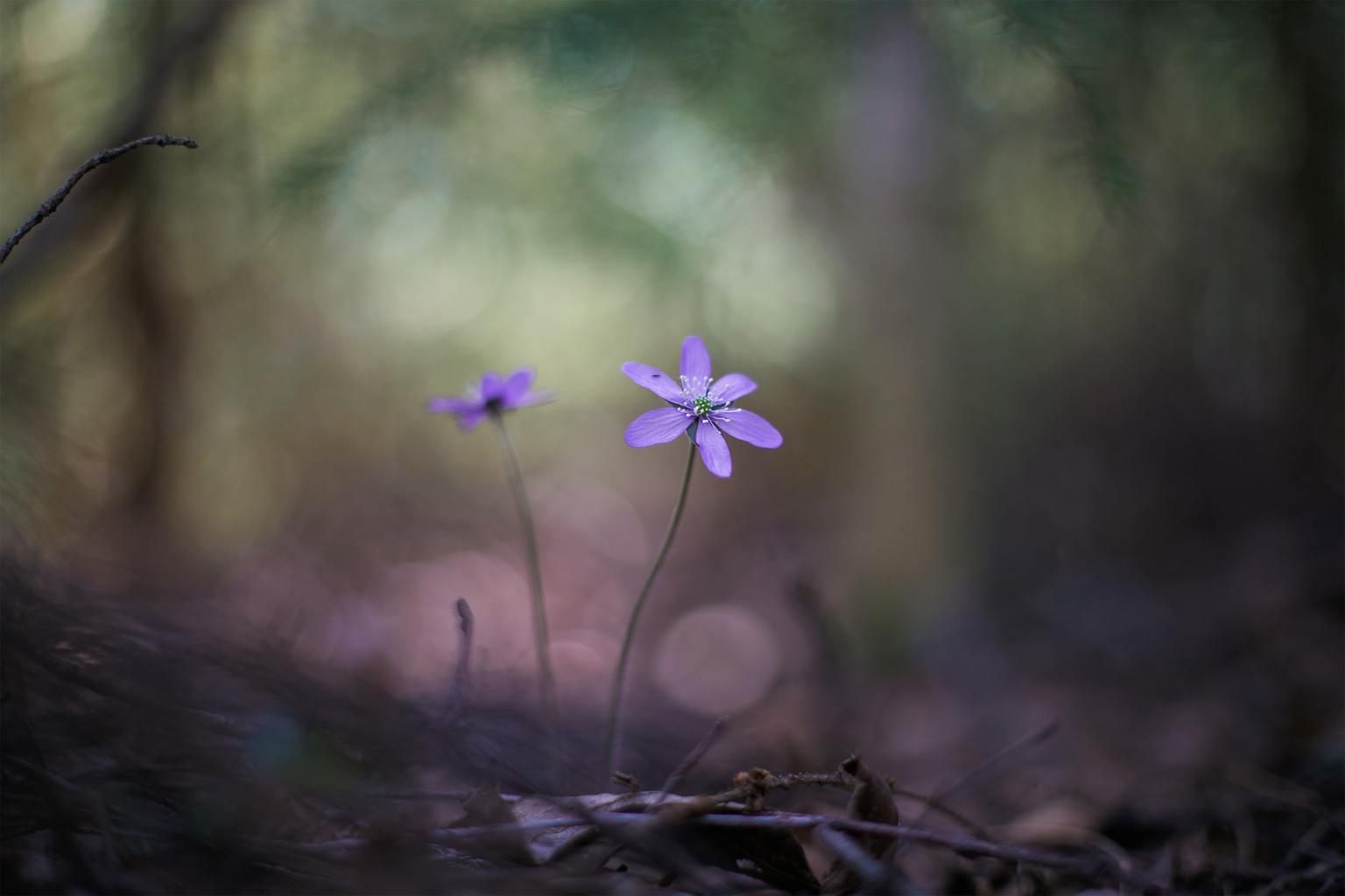 Flor con bokeh y verde de fondo