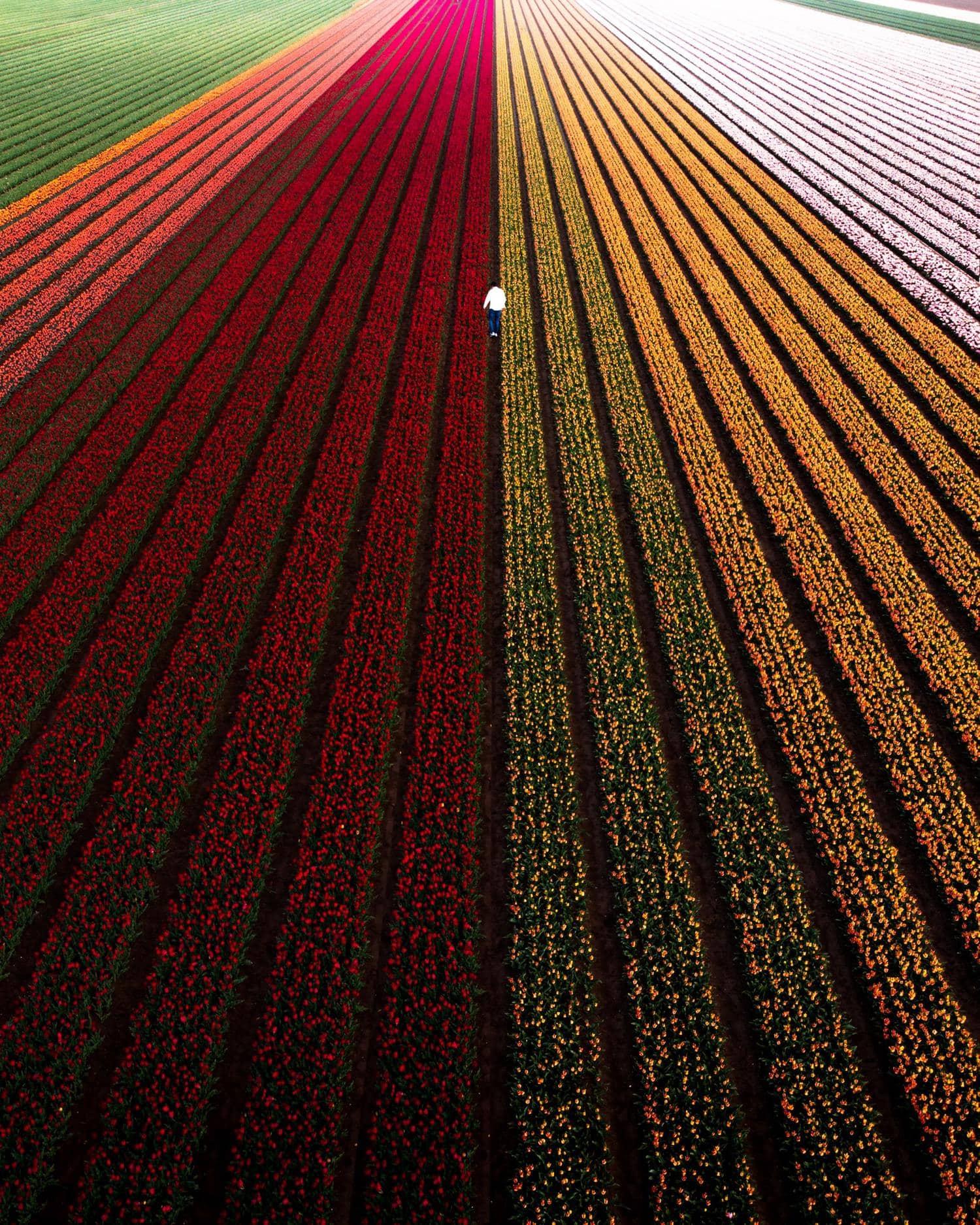Campos de flores con líneas