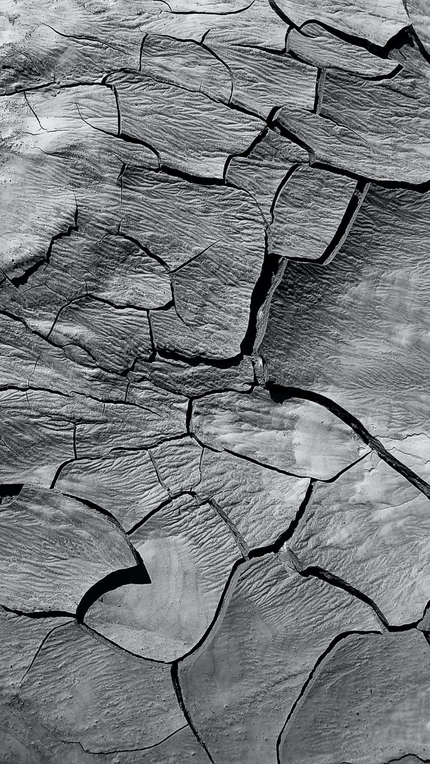 corteza en blanco y negro con textura