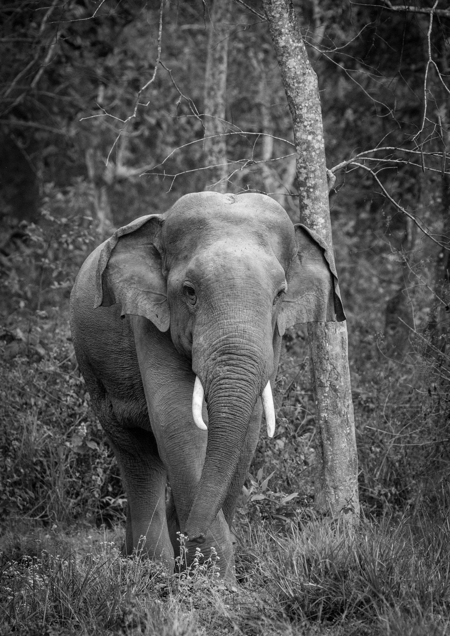 Piel de elefante