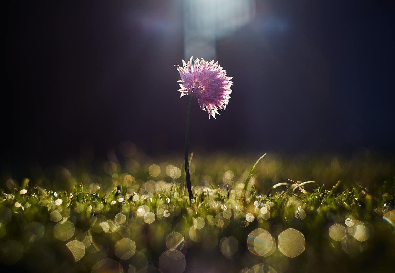 Flor a contraluz con bokeh